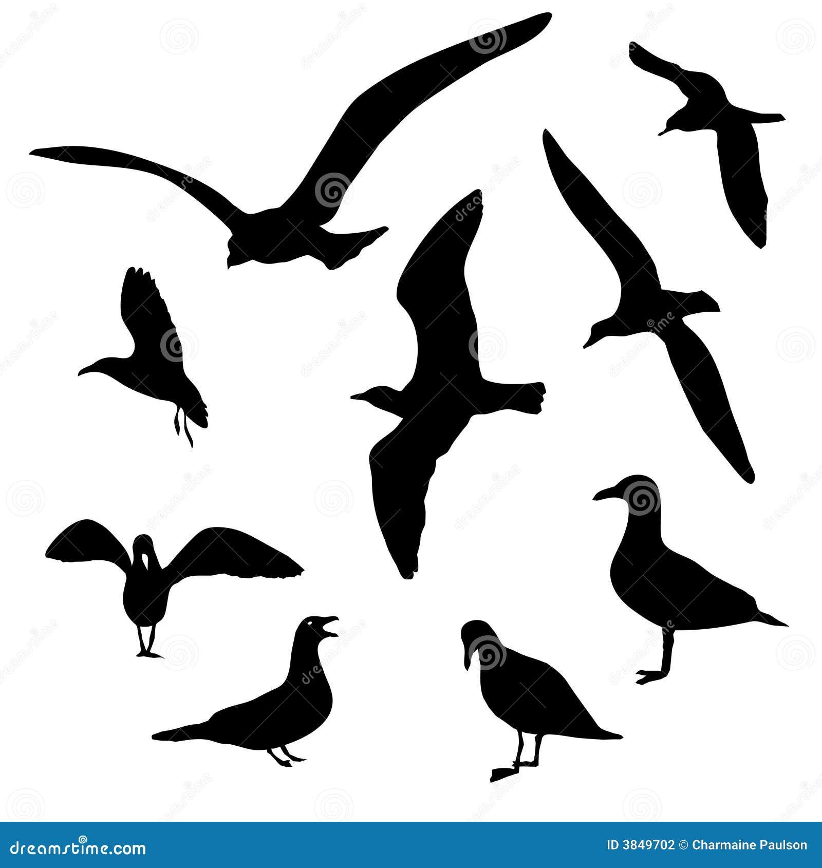 查出的海鸥