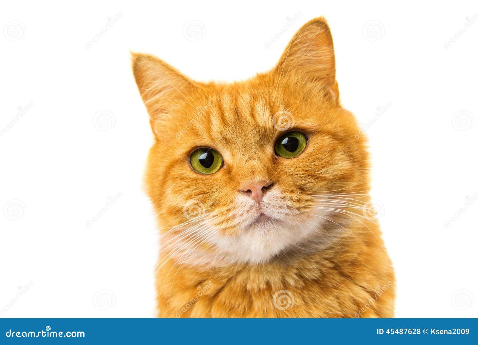 查出的猫姜
