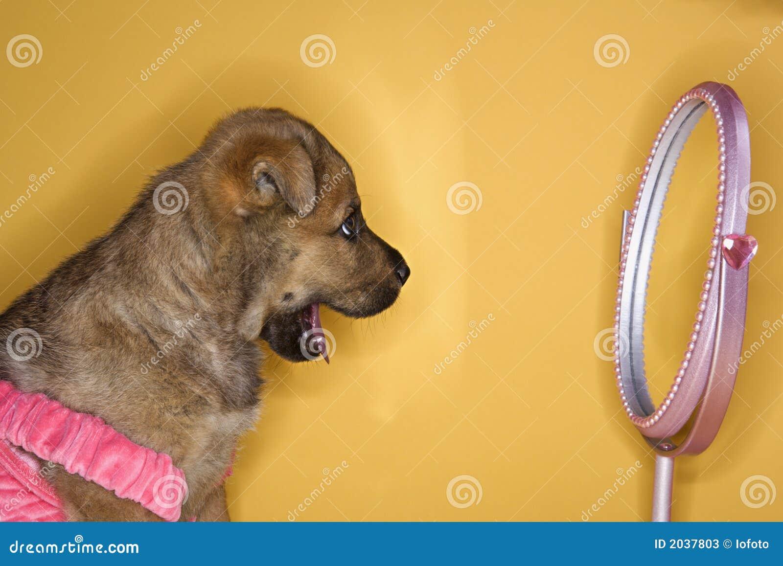 查找镜子小狗的礼服