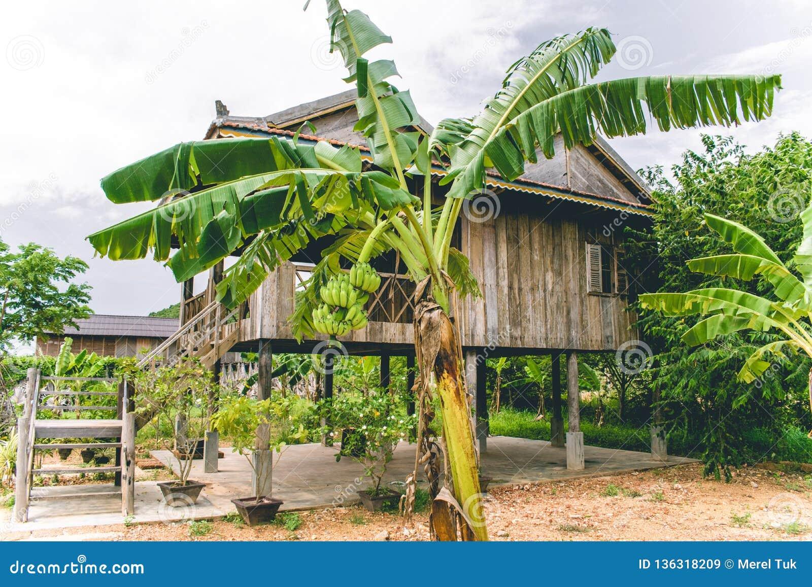 柬埔寨Kampot胡椒种植园亚洲东南部