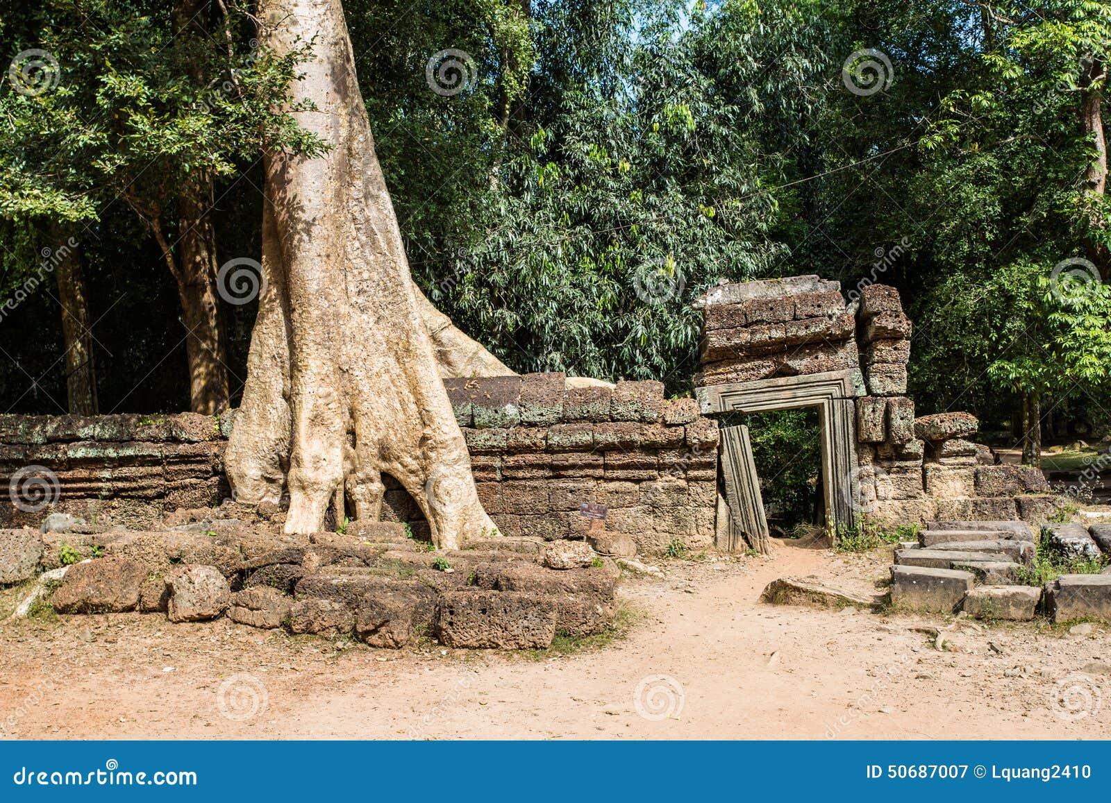 Download 柬埔寨prohm ta寺庙 库存图片. 图片 包括有 镇痛药, 印度, 投反对票, 本质, 拱道, 改良 - 50687007