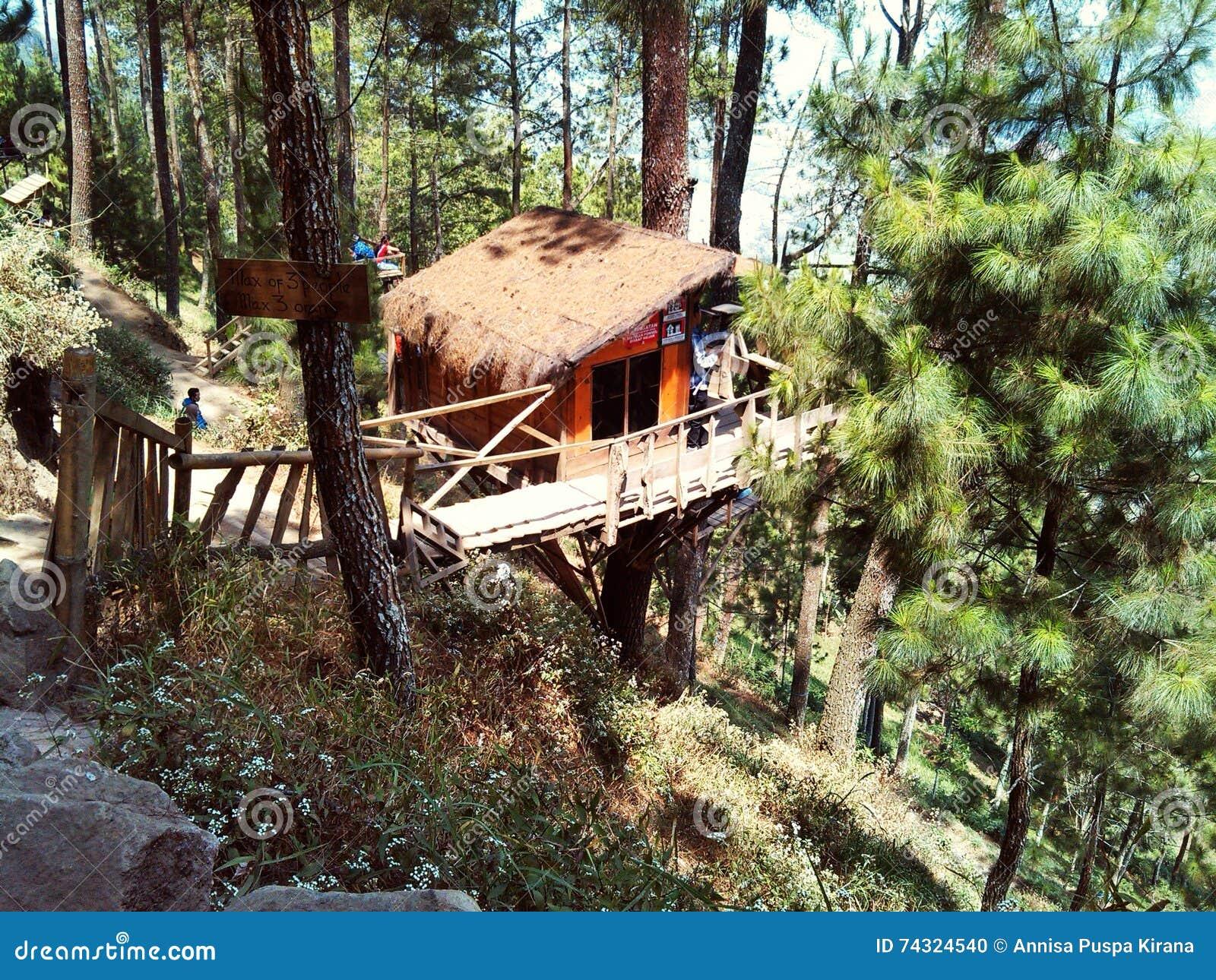 树上小屋在松属热带森林里