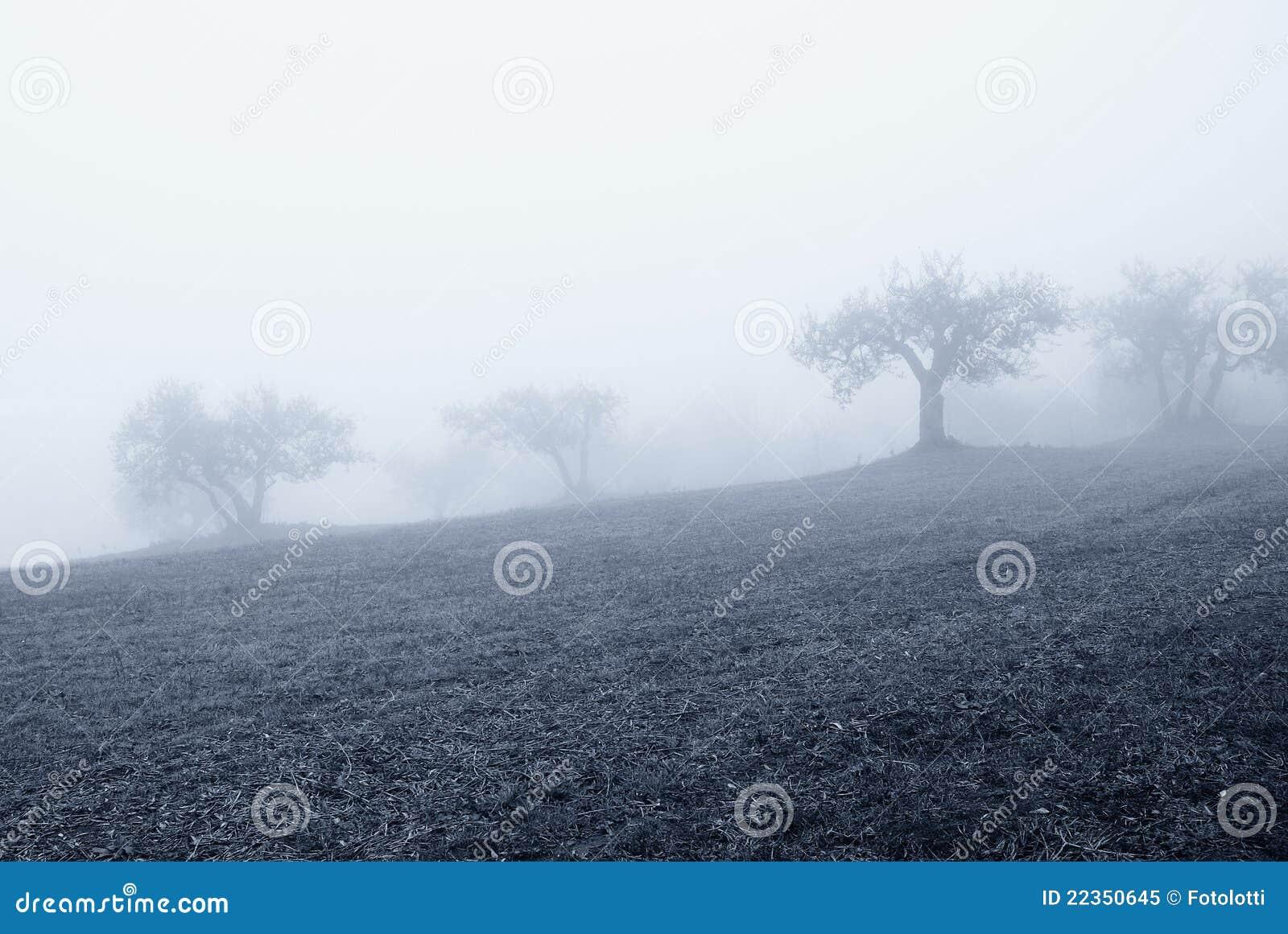 树丛橄榄冬天