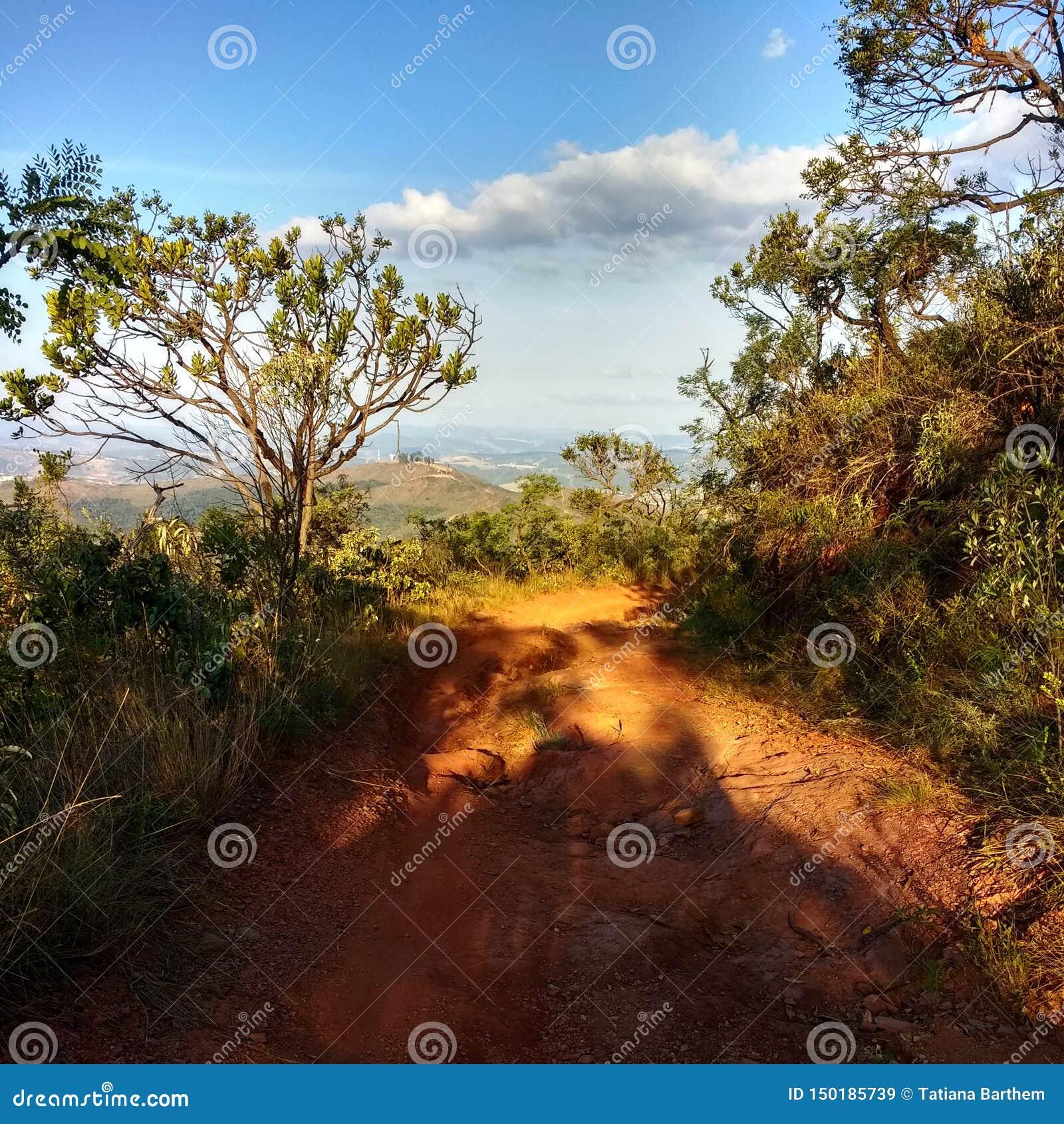 树之间的土路道路在山