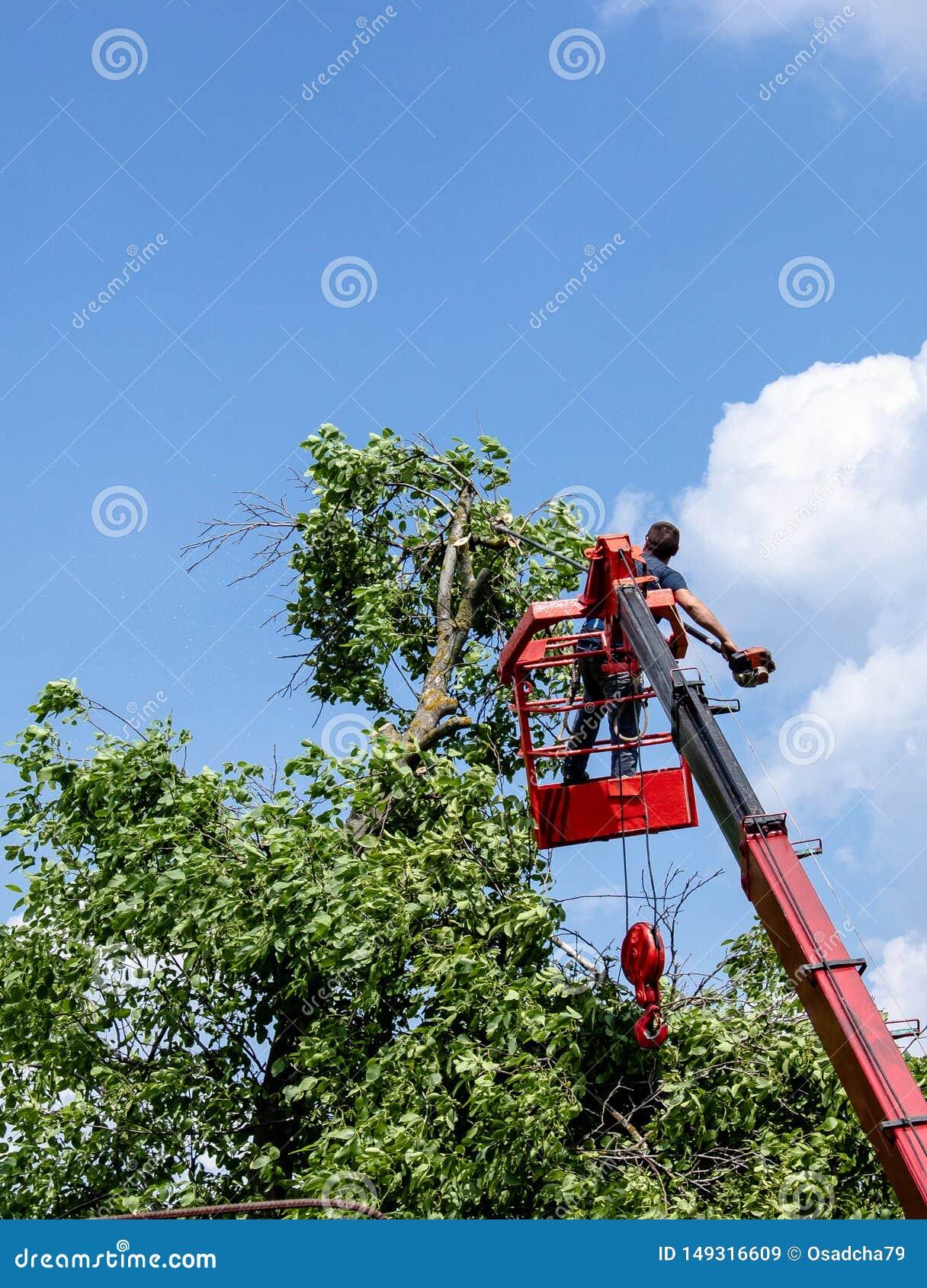 树修剪和锯由有一个锯身分的一个人在一辆机械驾空滑车的平台