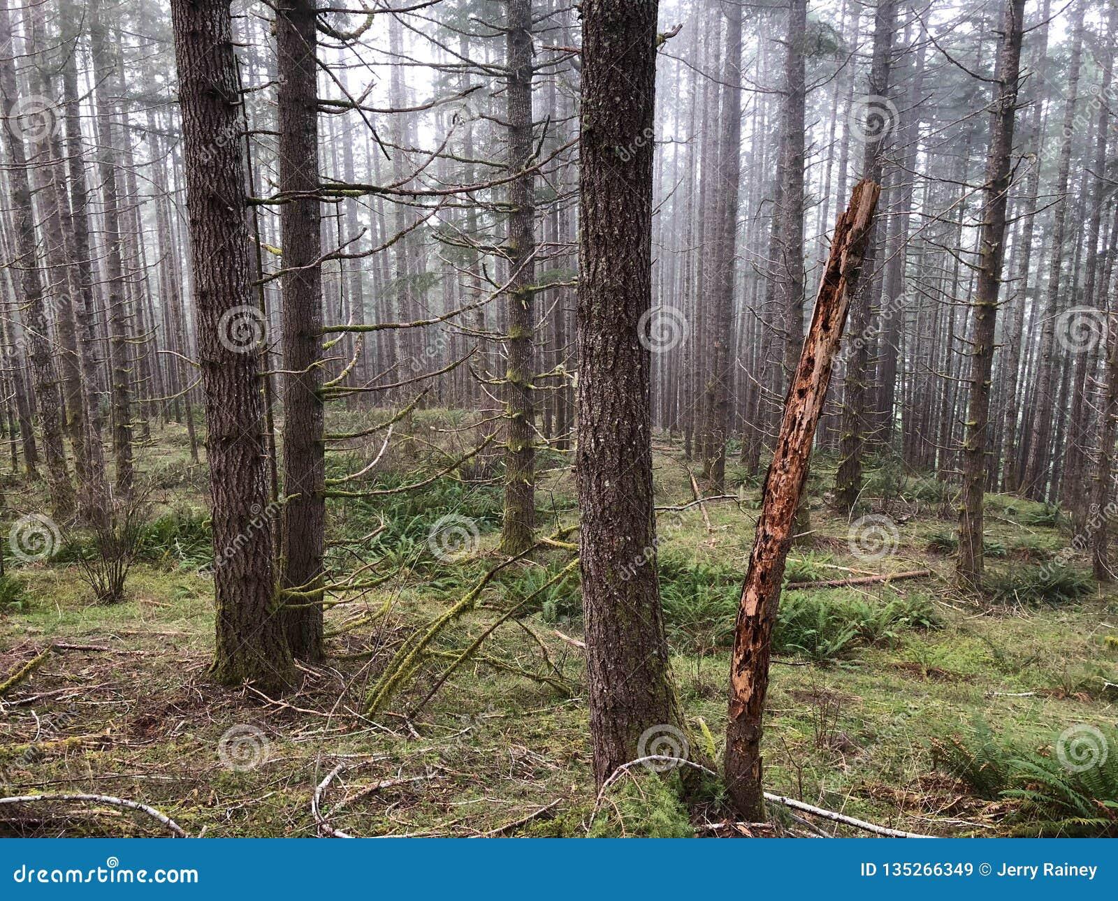 树和刷子在森林山