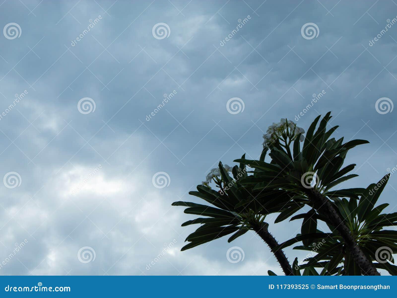 树和天空在雨和阴云密布以后