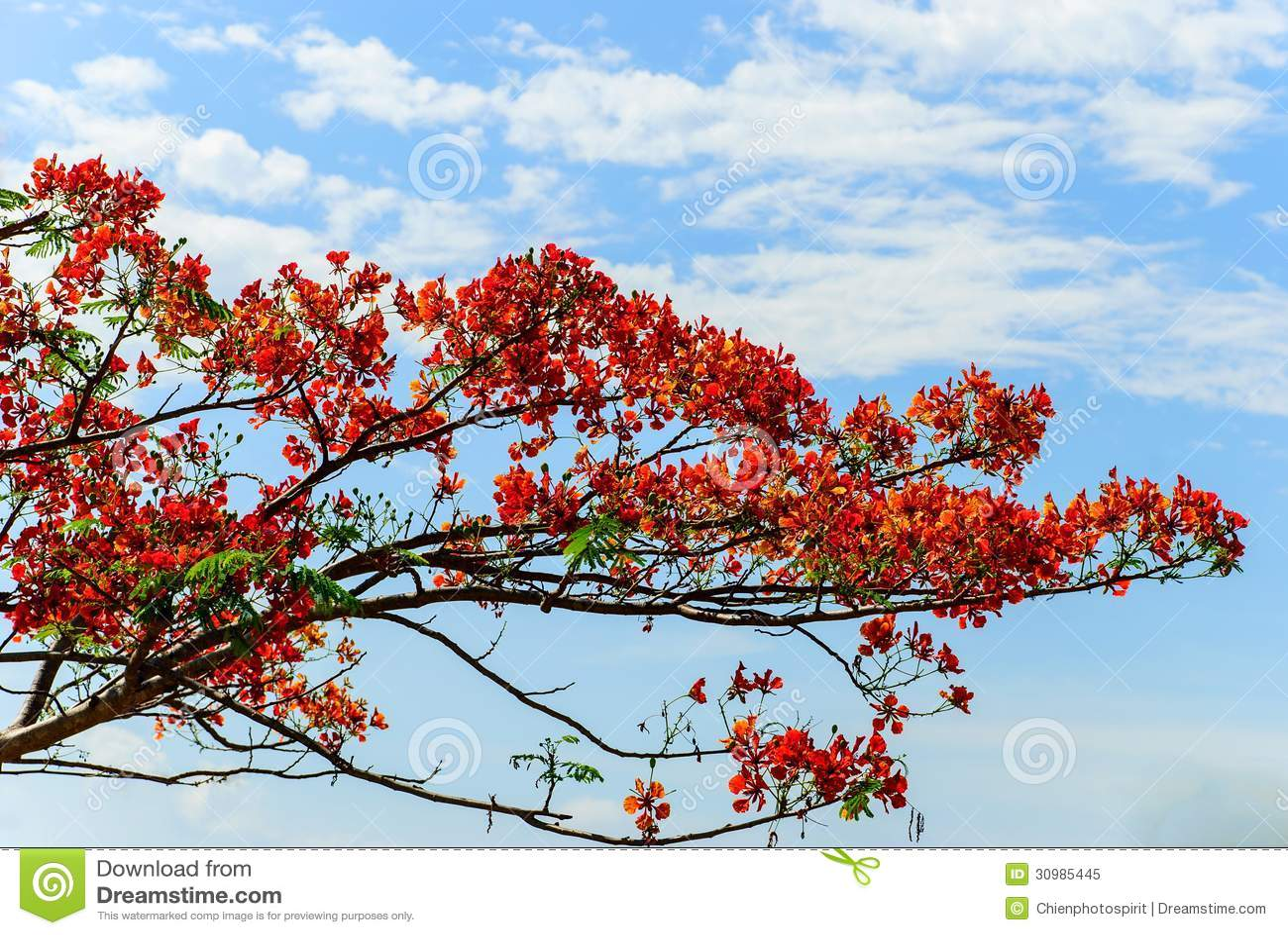 树和天空10kvv天空典型图片