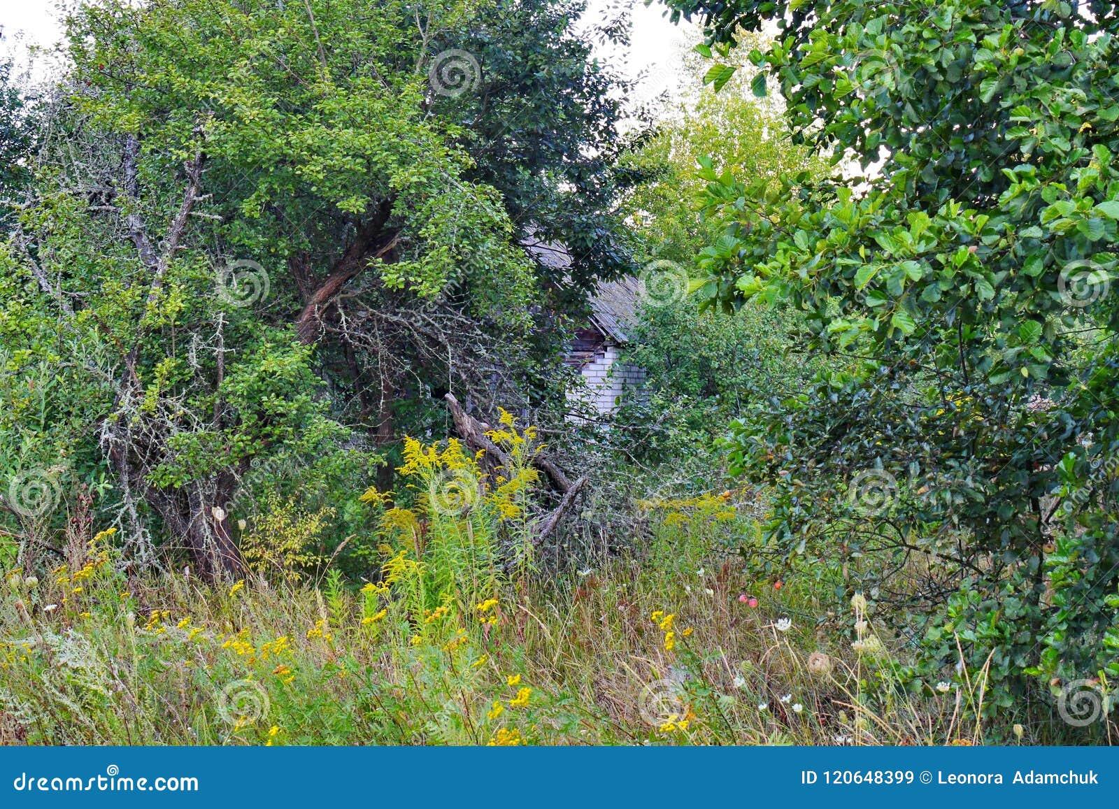 树和灌木丛林,以及辩明老的高干草是几乎不可能的,部分地