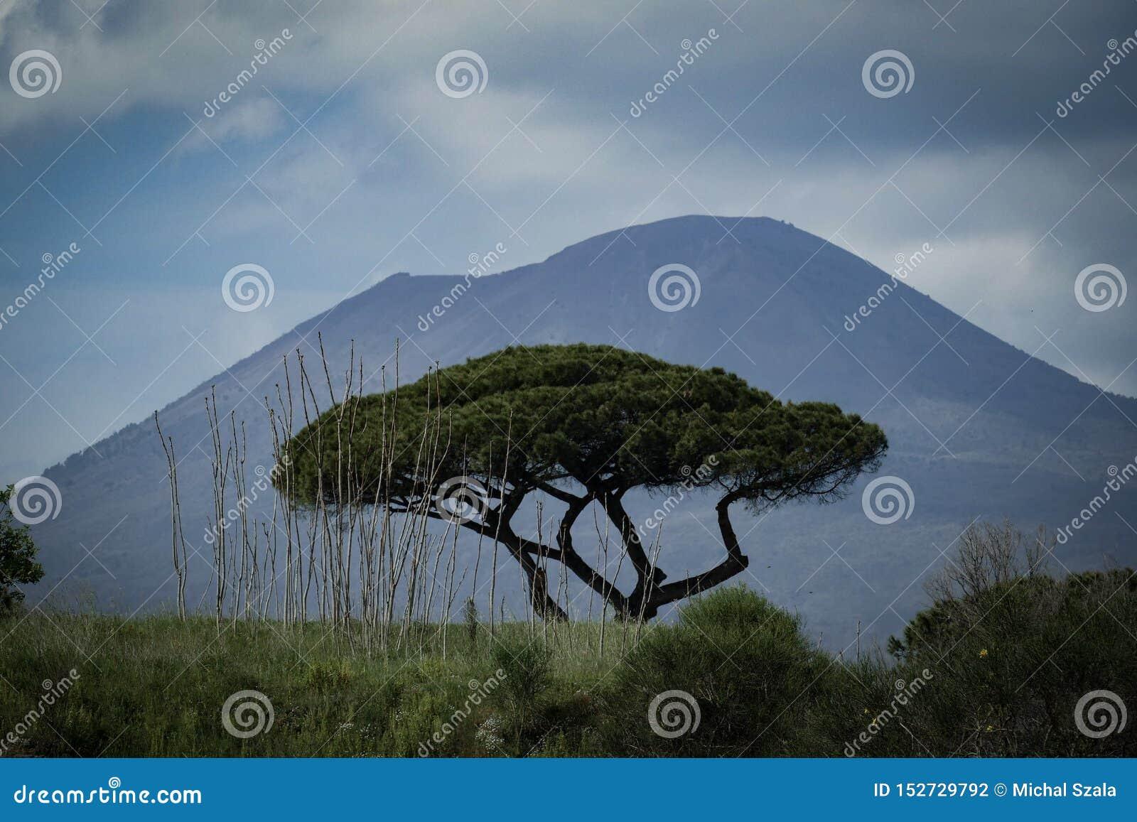 树和维苏威vulcan在背景中