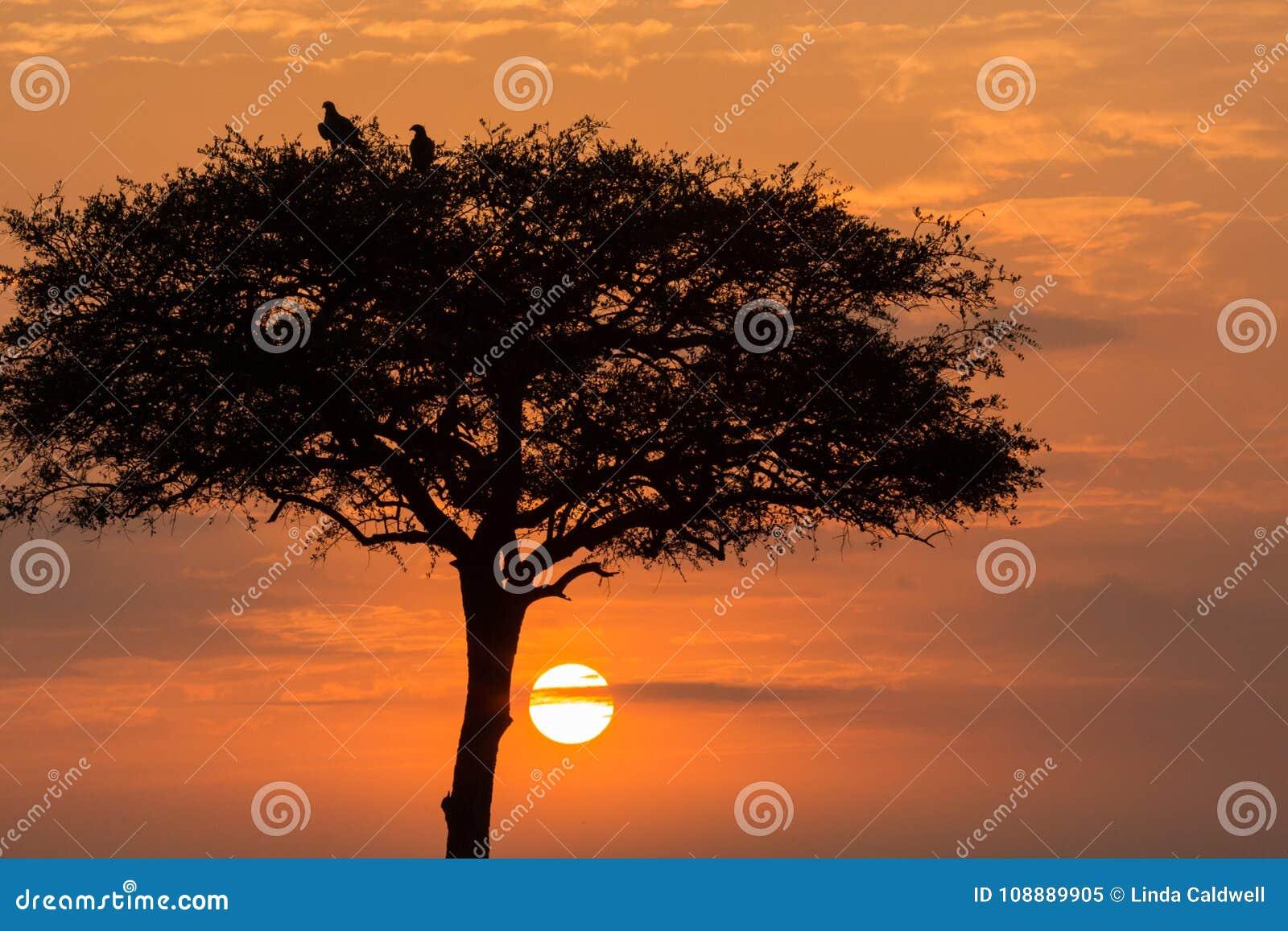 树和鸟现出轮廓在日出