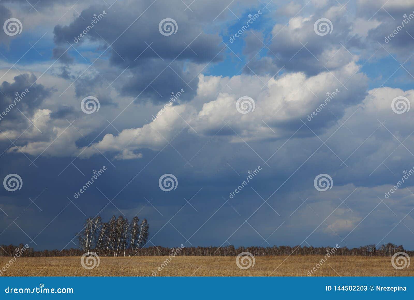 树在反对春天天空的草甸