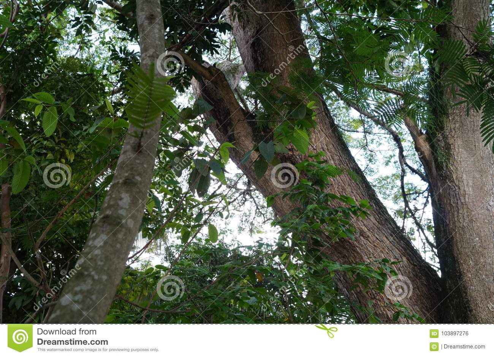 树在哥伦比亚