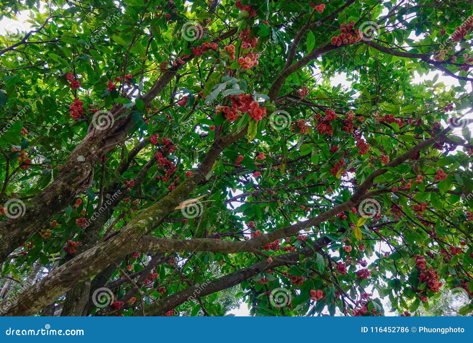 树在植物园里
