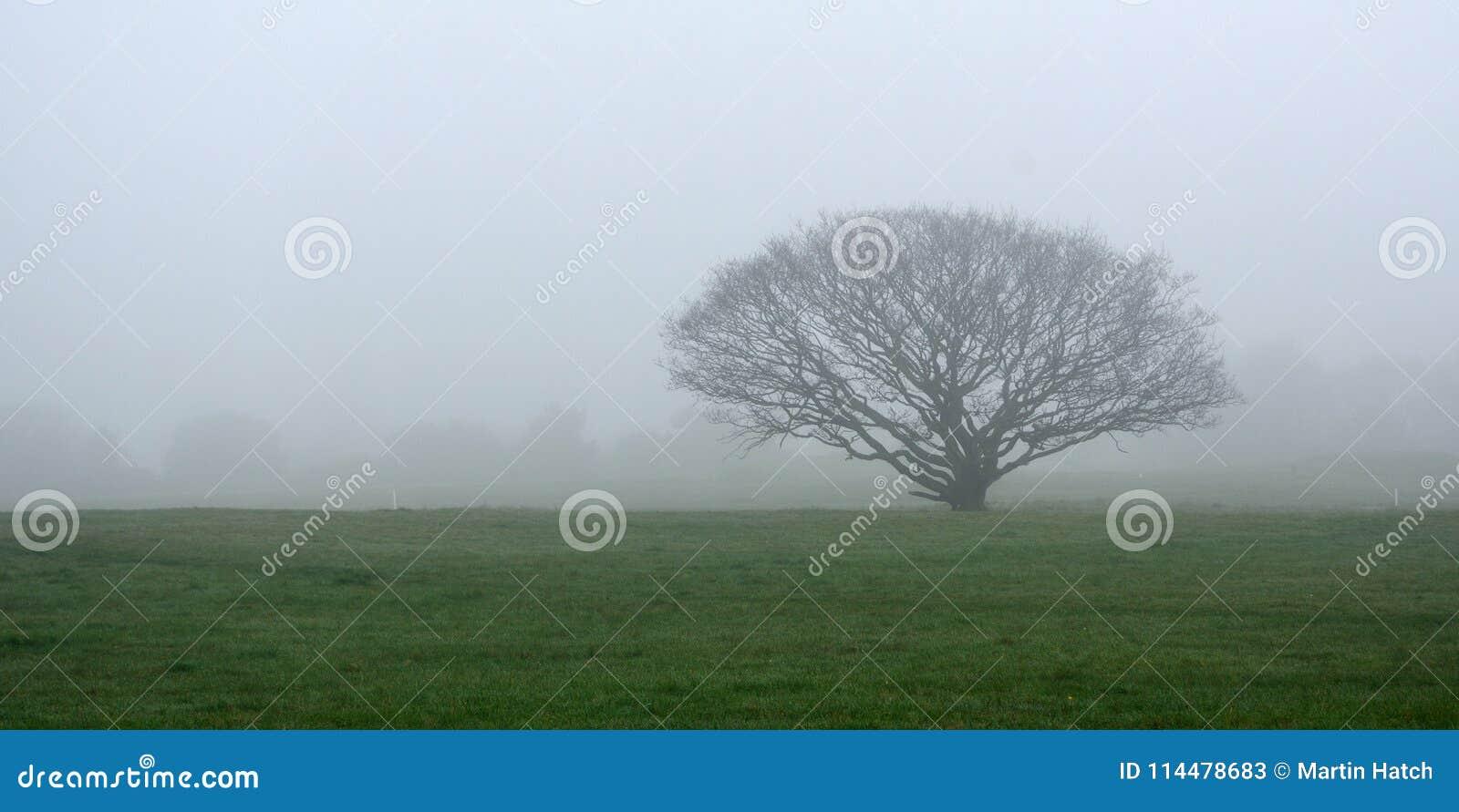 树在草甸在有雾的天