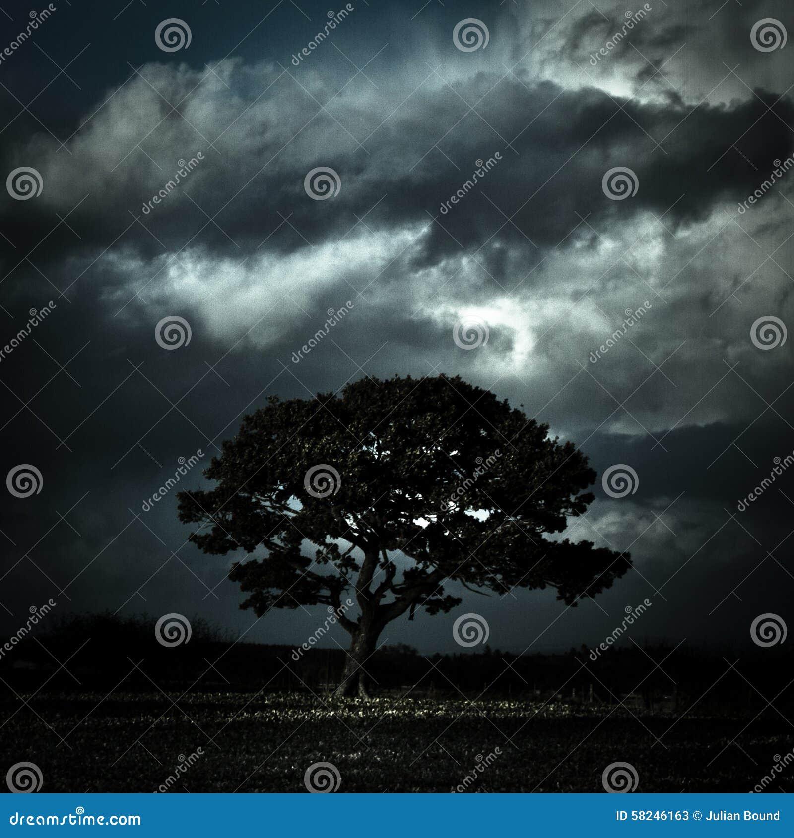 树在风雨如磐的天空下, Oswestry,萨罗普郡,英国