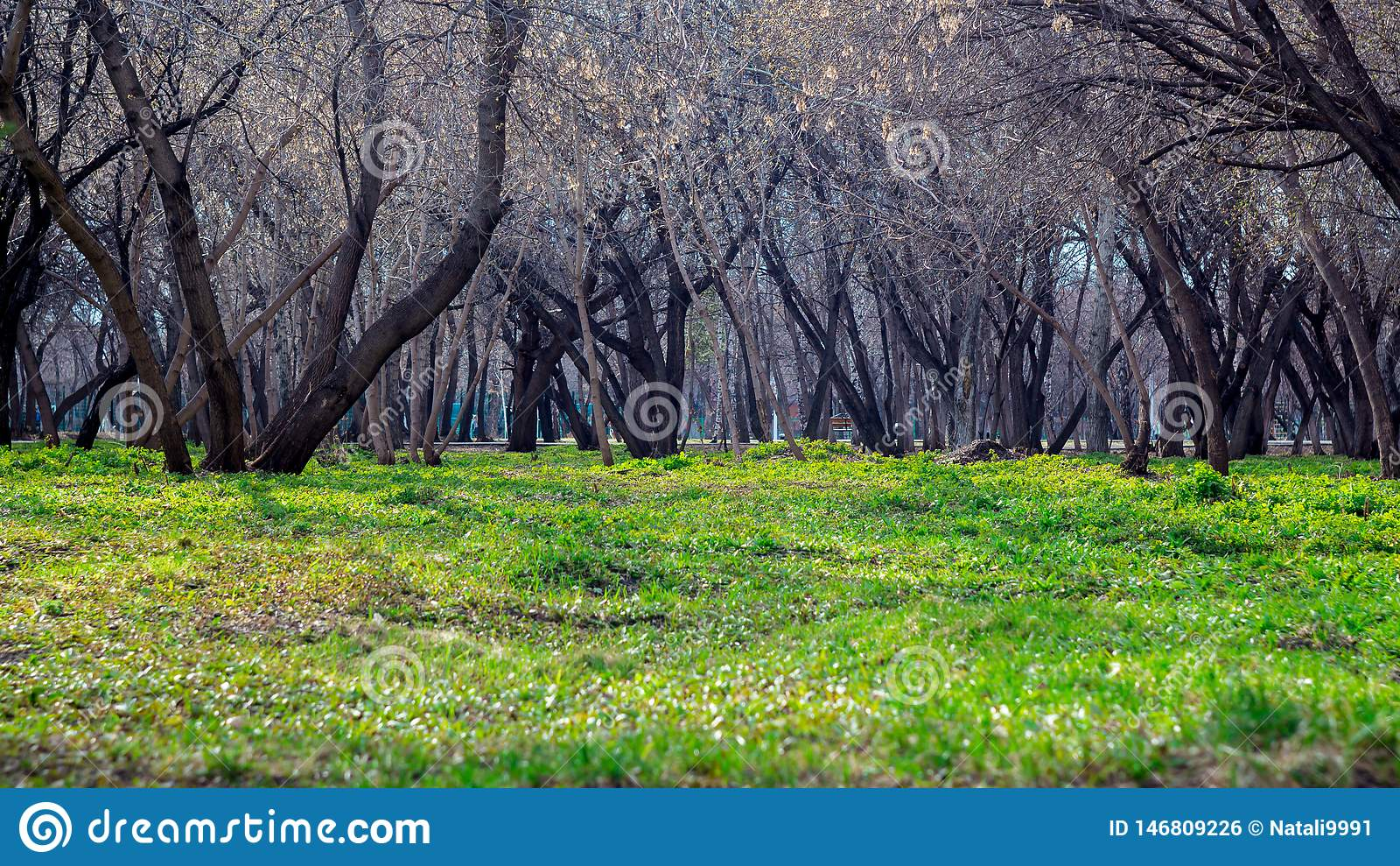 树庭院 步行在绿草的公园 健康生活方式和新鲜空气 r 春天、秋天和夏天