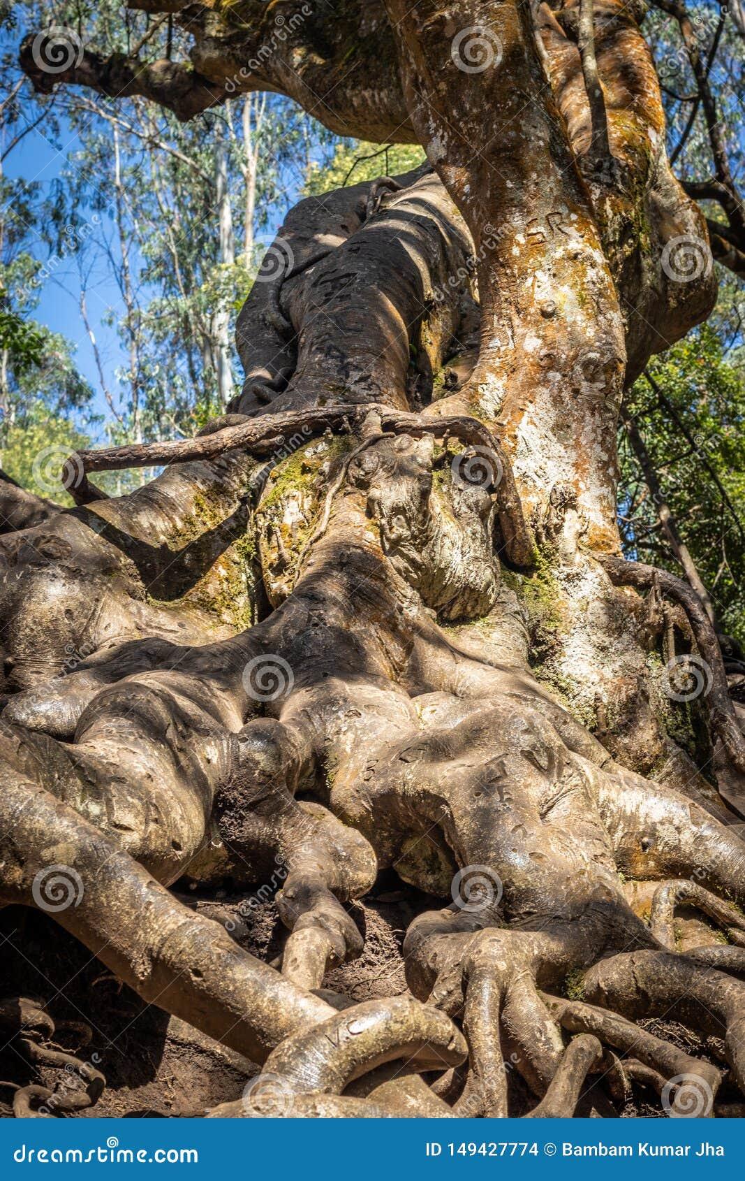 树根深入地球