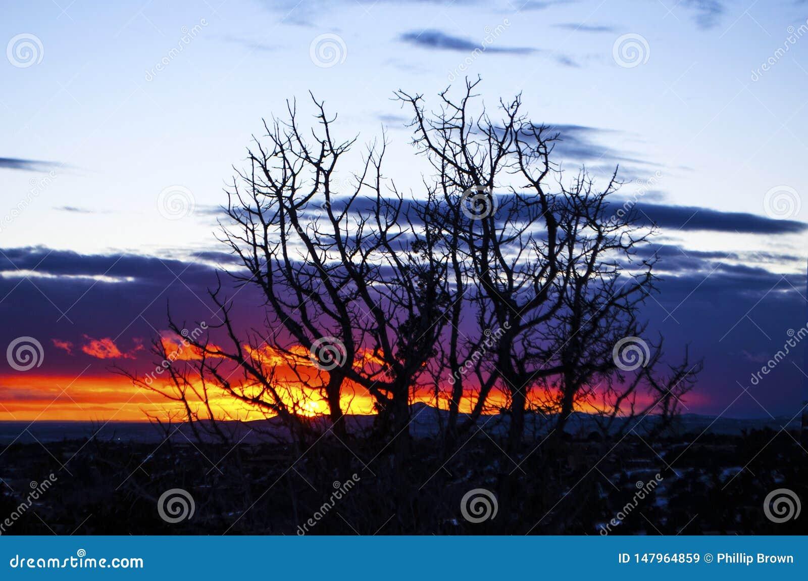 树现出轮廓反对西南日落