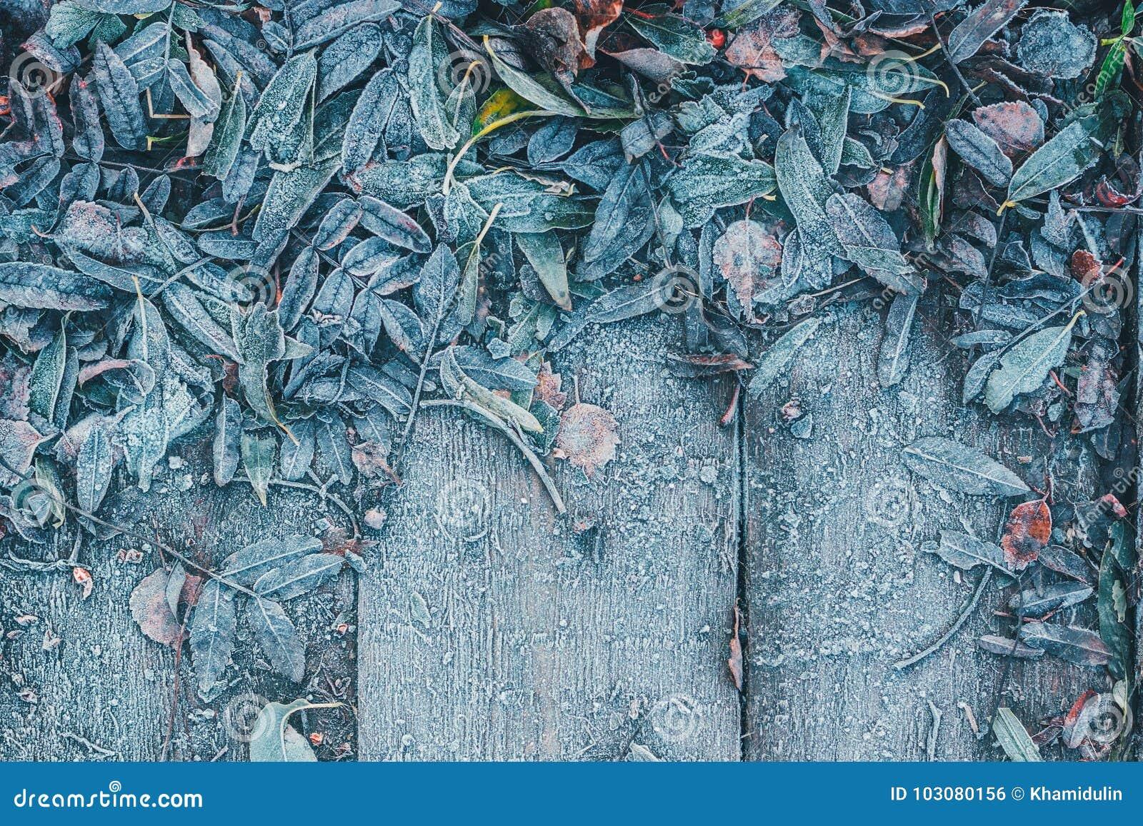 树的下落的叶子在木背景结冰了