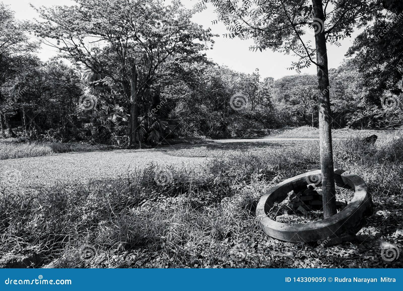 树的黑白图象