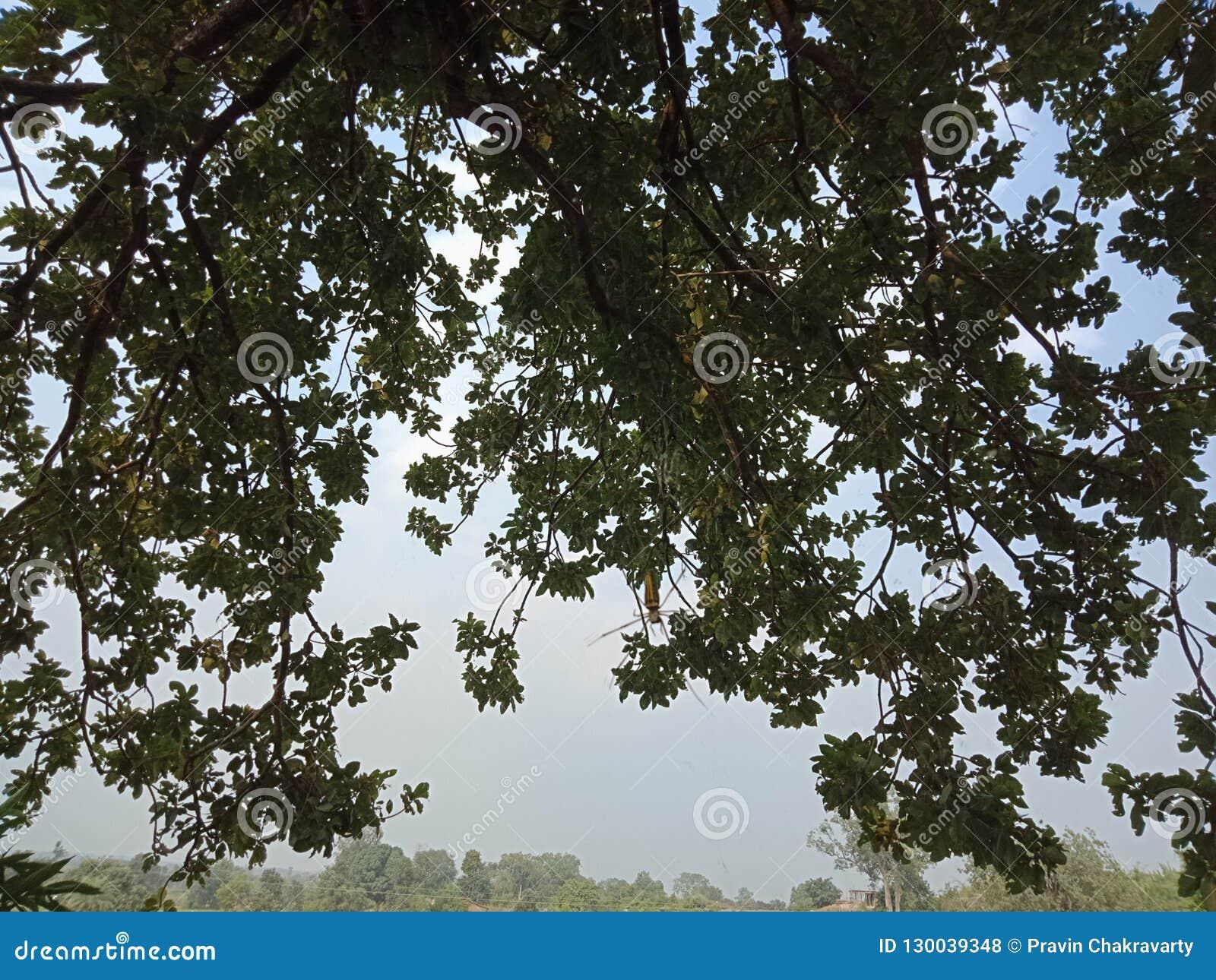树皮构造了背景,自然风景
