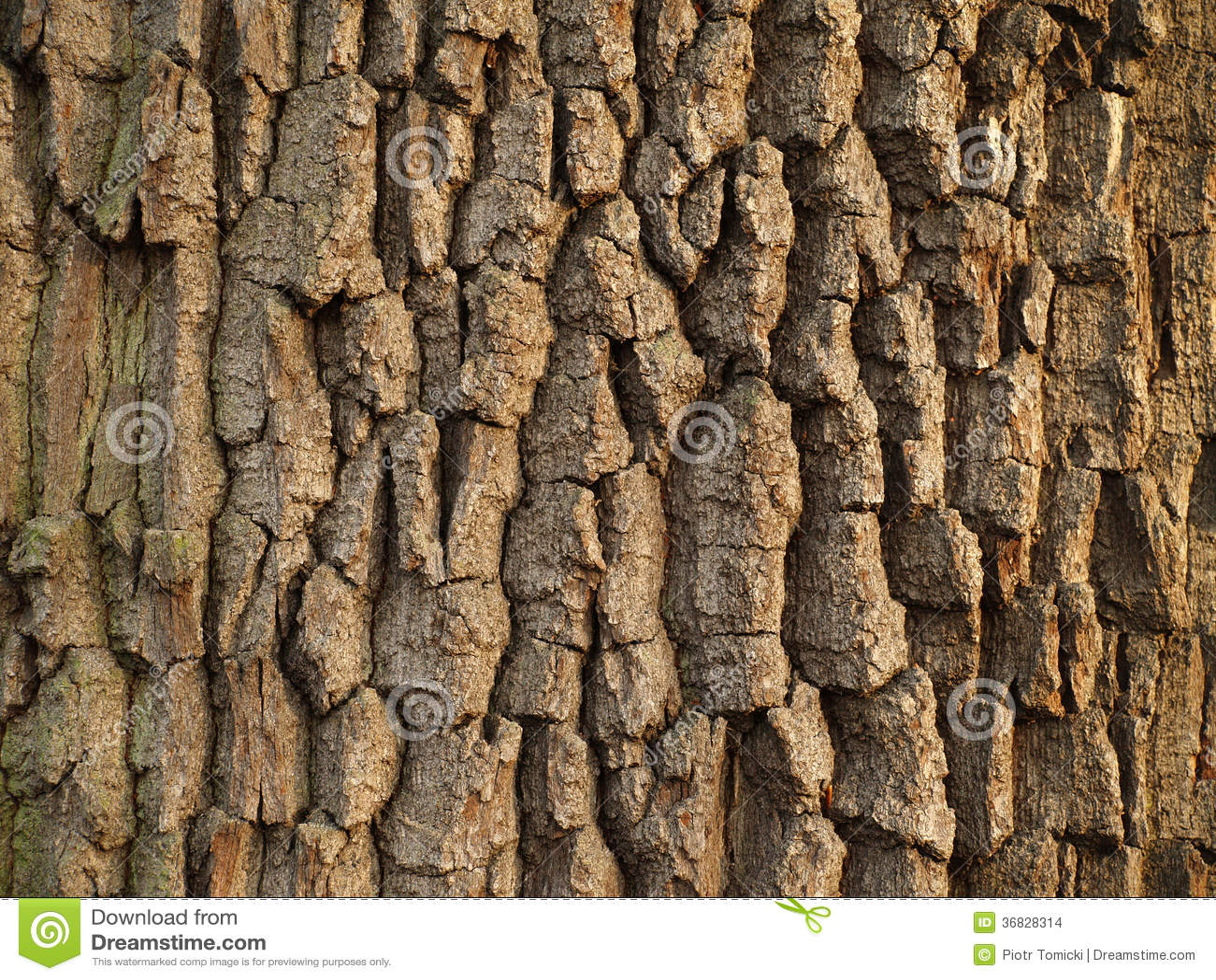 梦到贴树皮