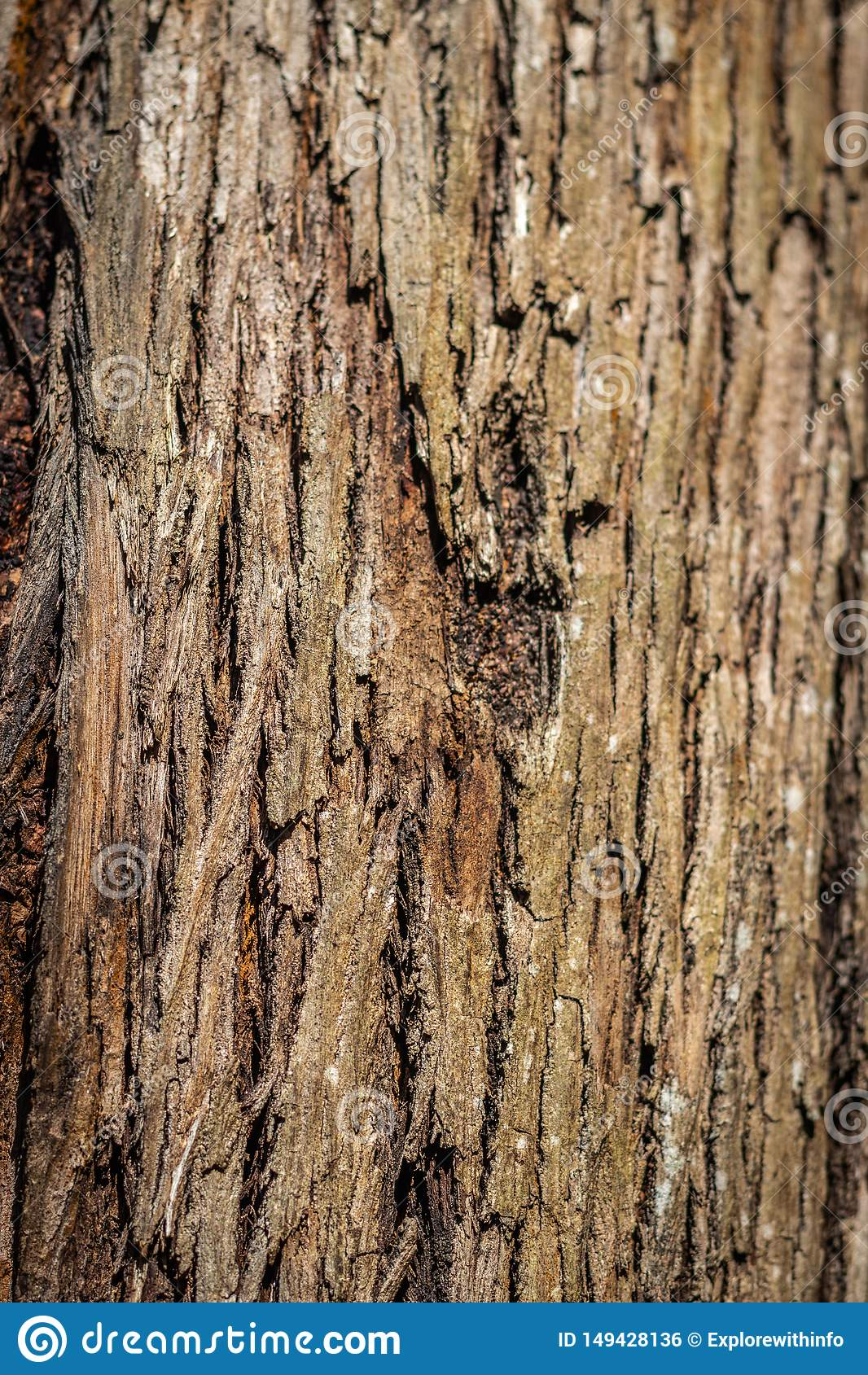 树皮肤残破的样式