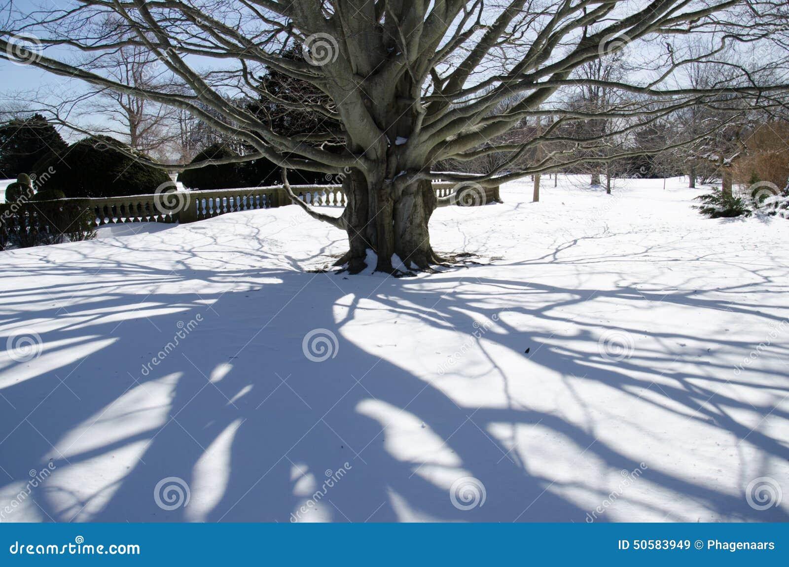 树-纽波特,康涅狄格,美国的阴影在破碎机豪宅之外的