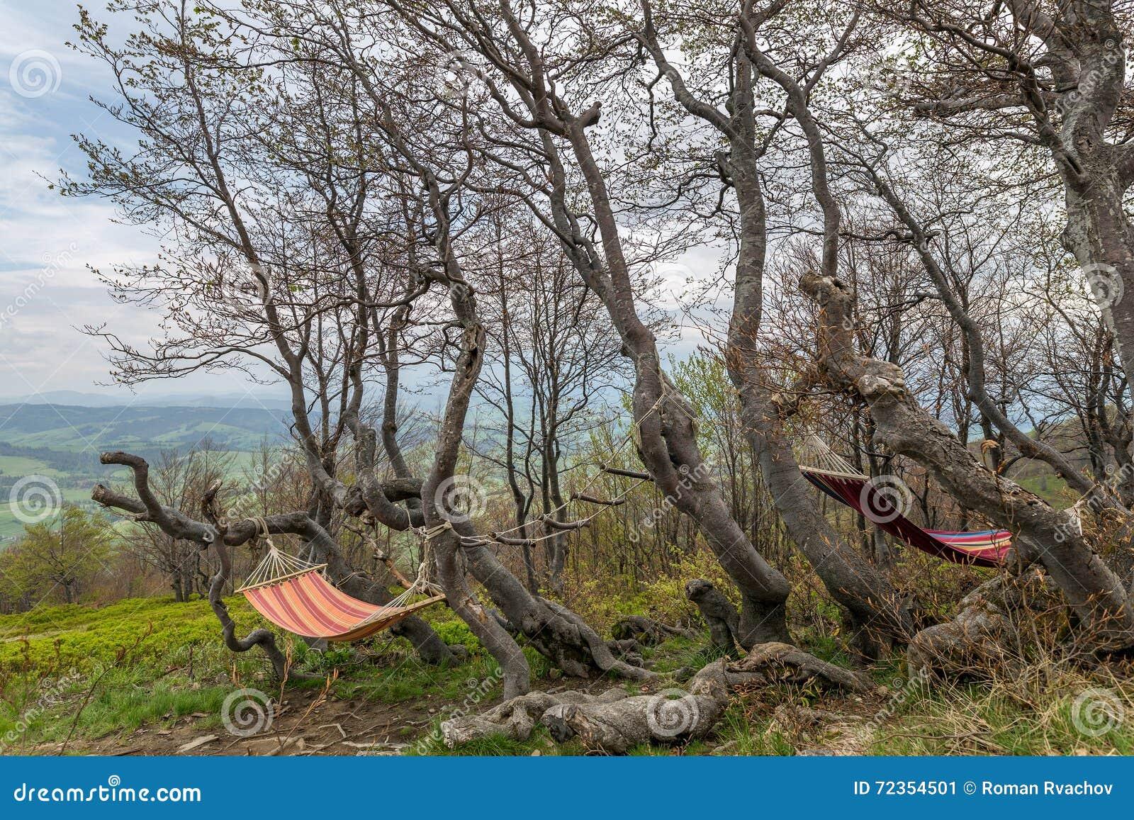 栓对树吊床