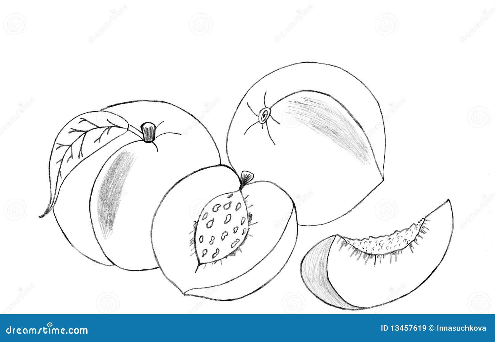 背景图画查出的桃子铅笔草图白色.图片