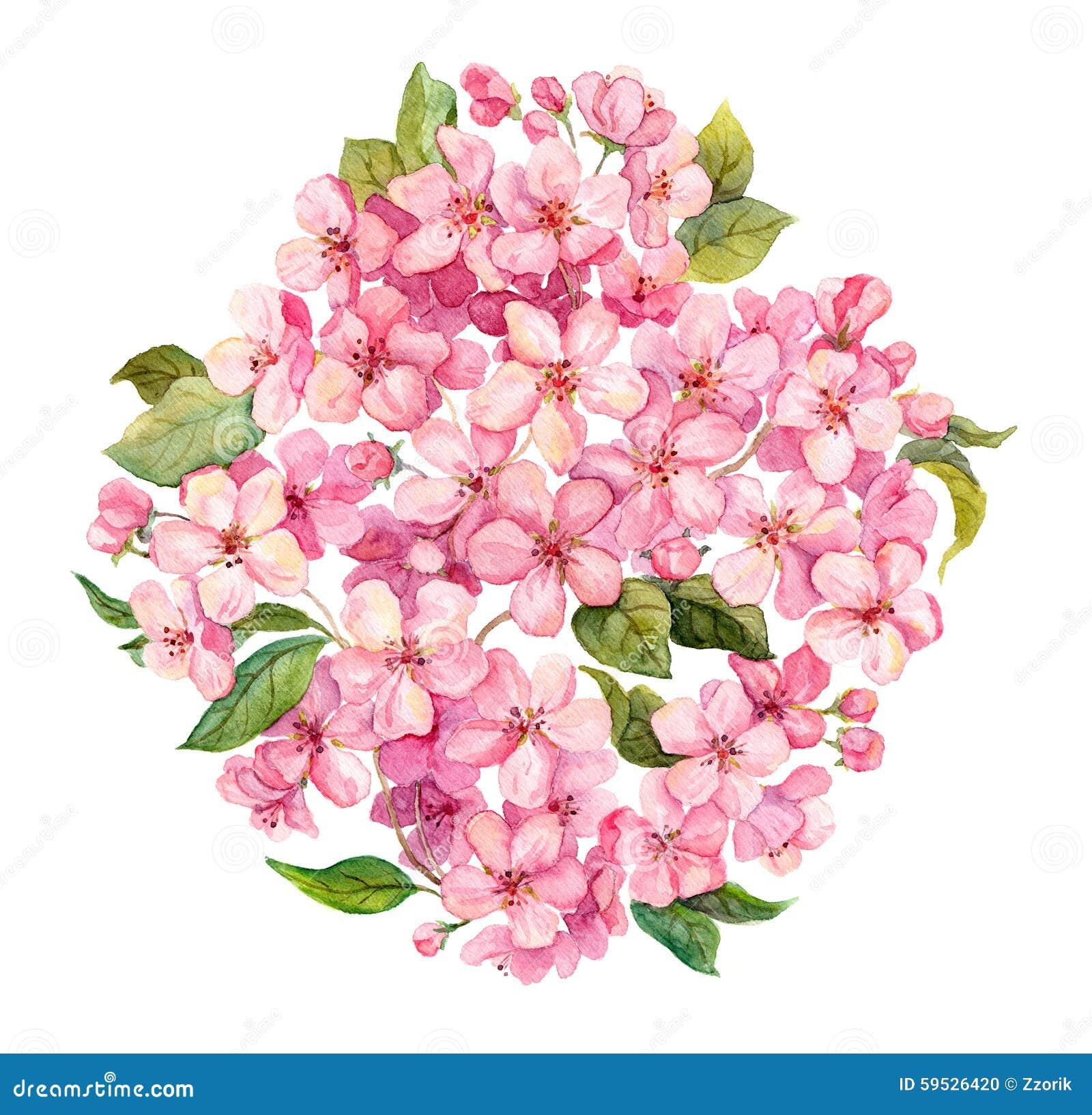 桃红色春天开花-佐仓,苹果花开花 水彩