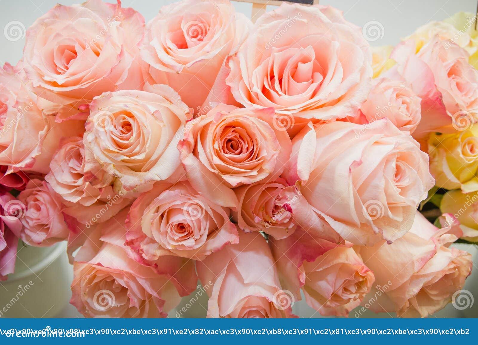桃红色玫瑰 它是很多桃红色玫瑰