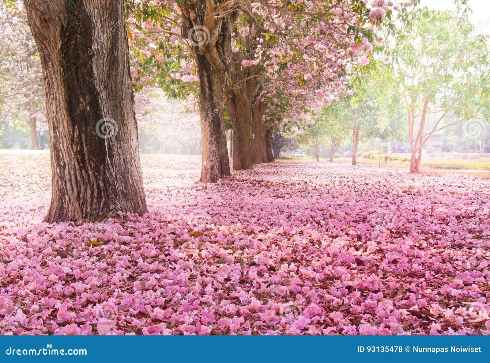 桃红色花树浪漫隧道