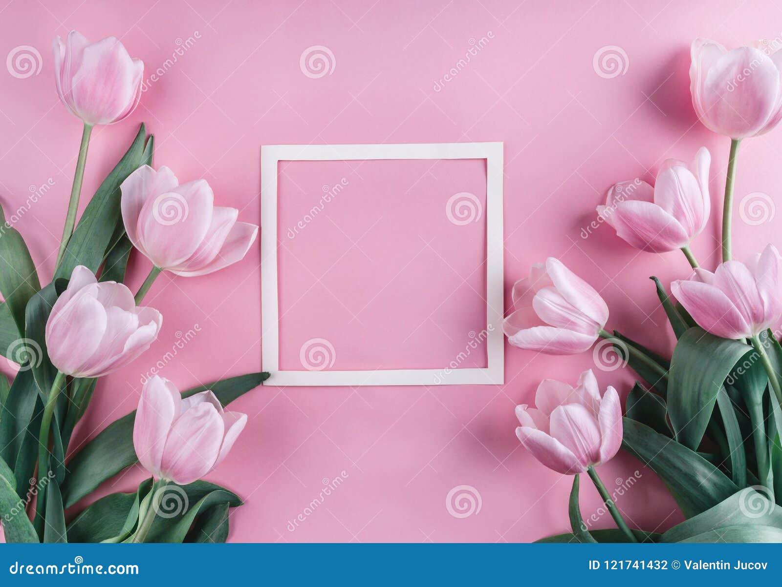 桃红色郁金香花和纸片在浅粉红色的背景的 圣徒情人节框架或背景