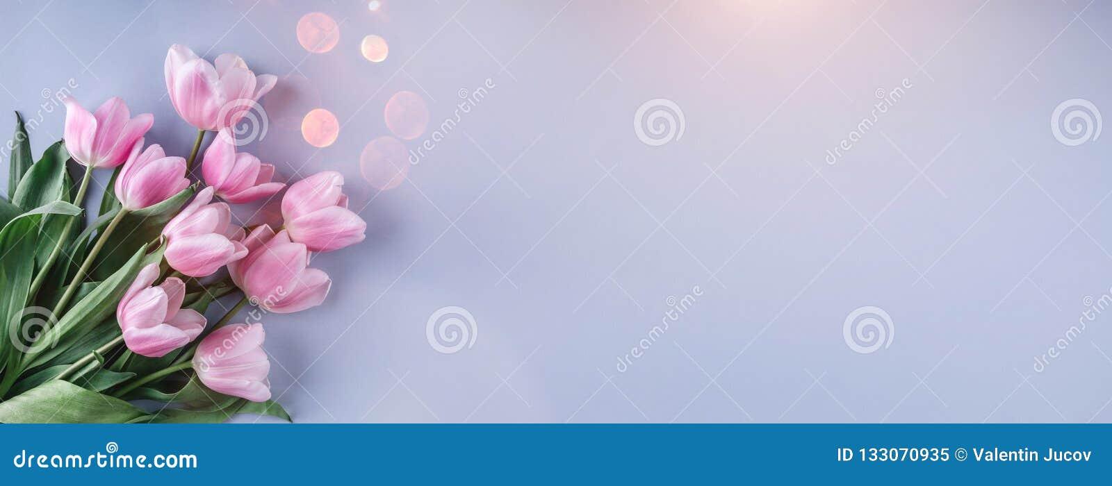 桃红色郁金香花束开花在浅兰的背景 贺卡或婚礼邀请