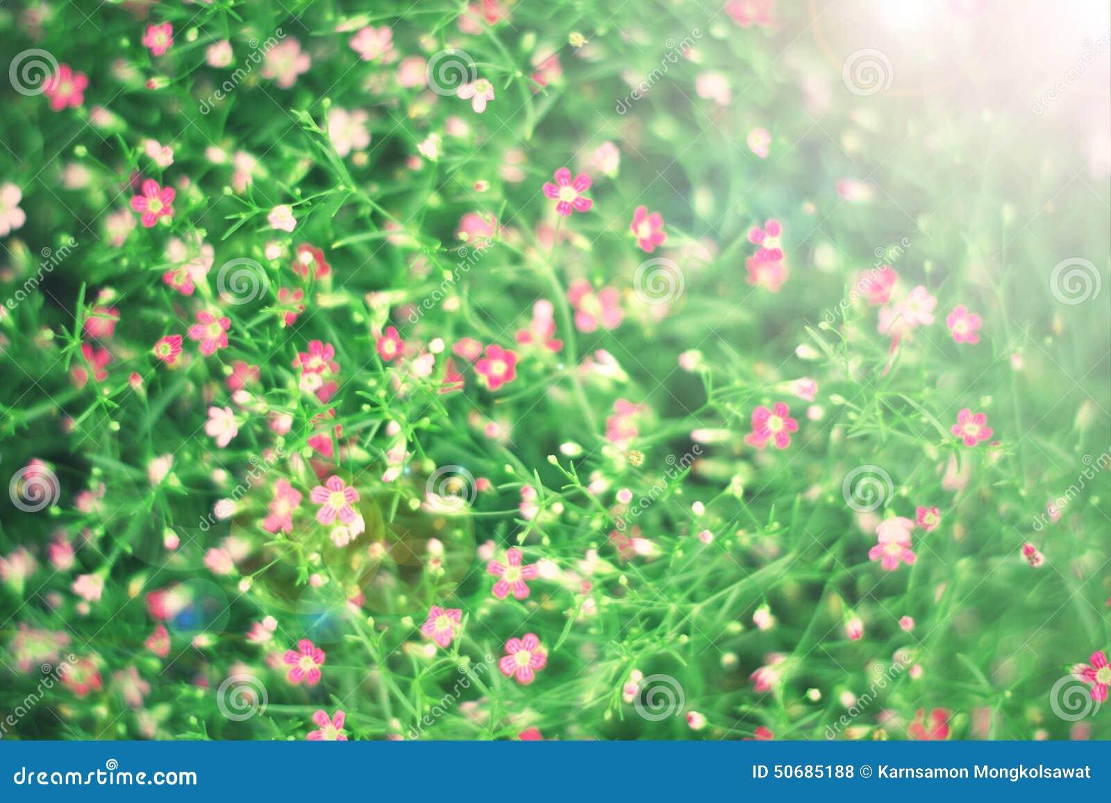 Download 桃红色野花背景葡萄酒照片 库存照片. 图片 包括有 绽放, 环境, 照片, 早晨, 逗人喜爱, 开花, 叶子 - 50685188
