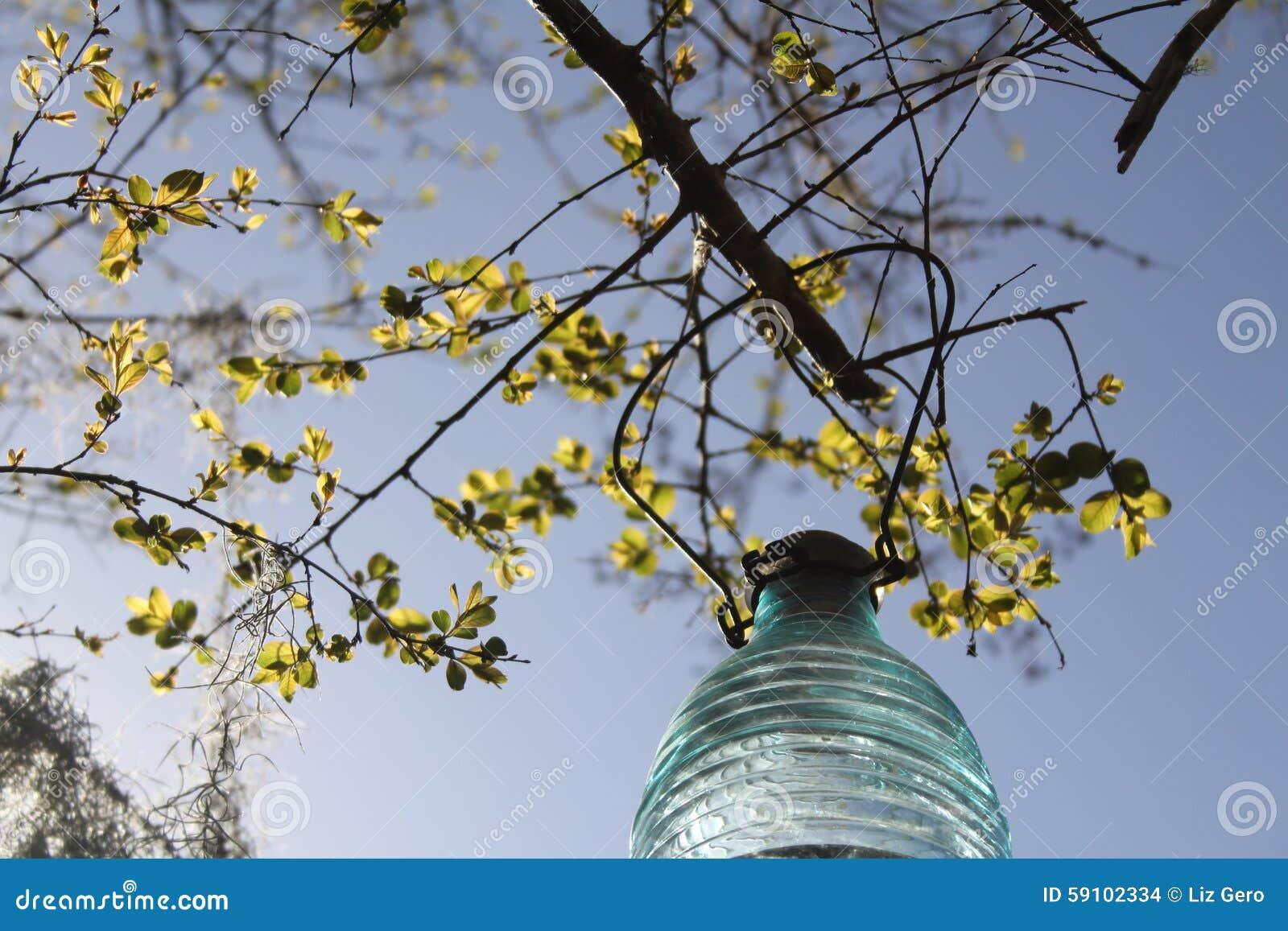 绉绸桃金娘和太阳灯笼