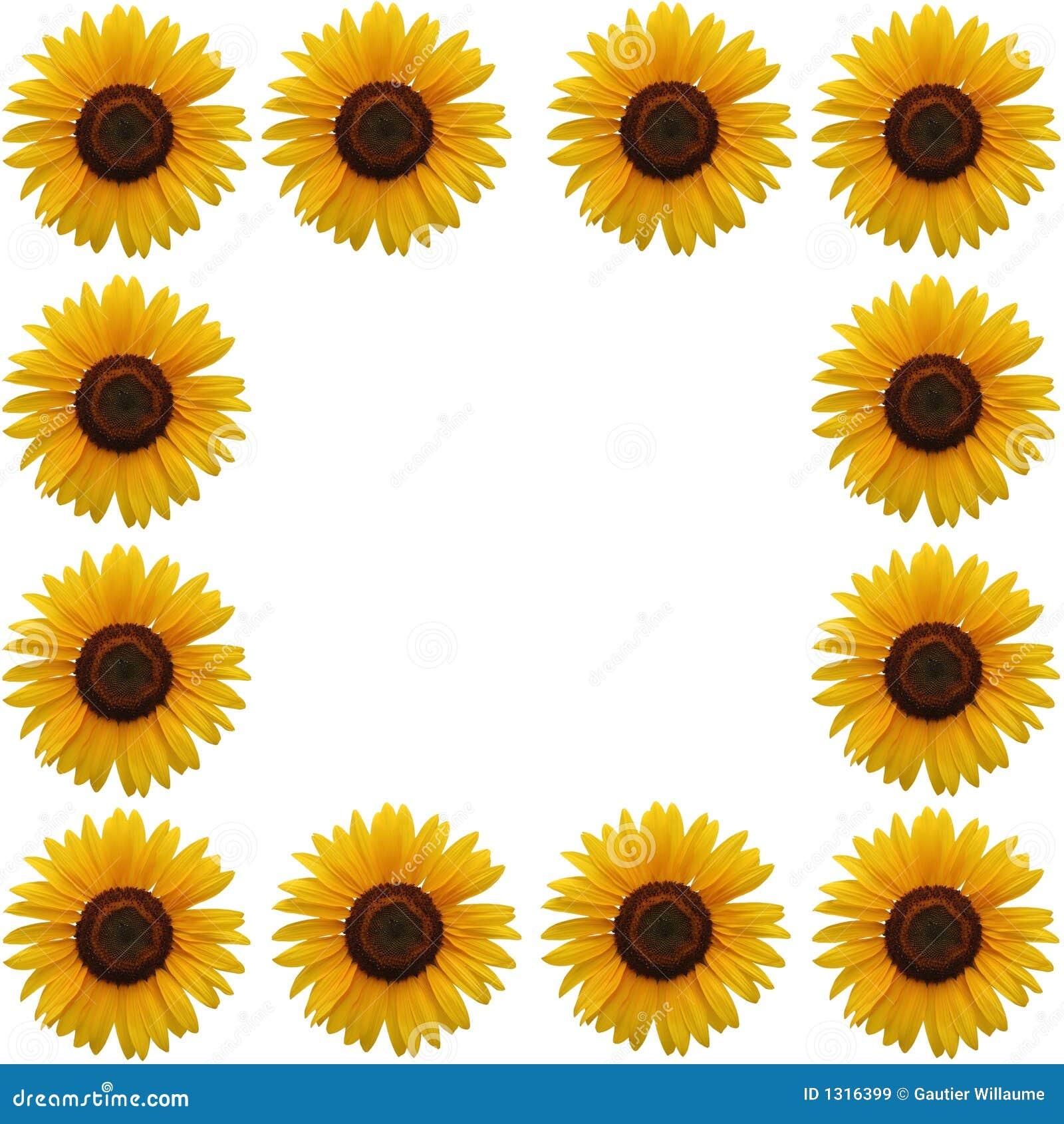框架向日葵