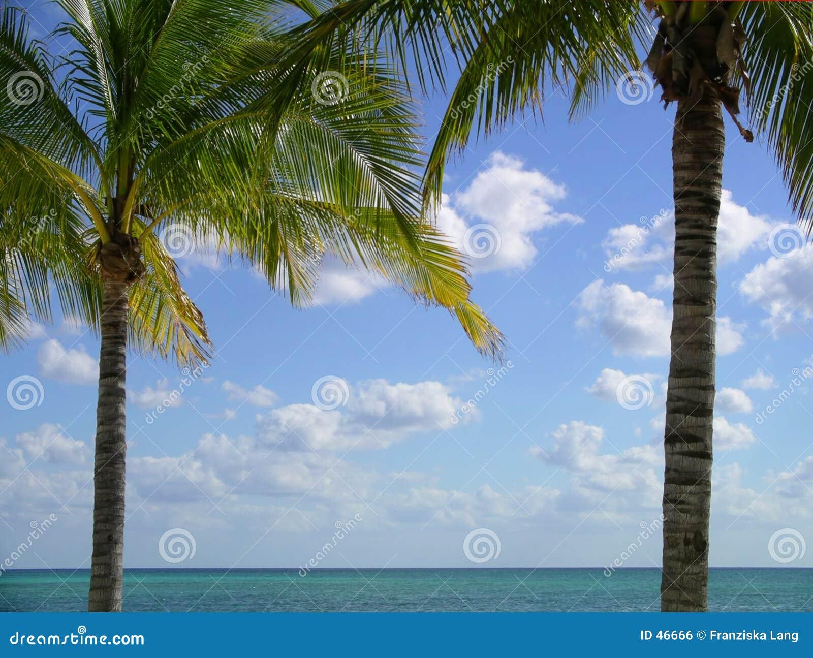 框架棕榈树