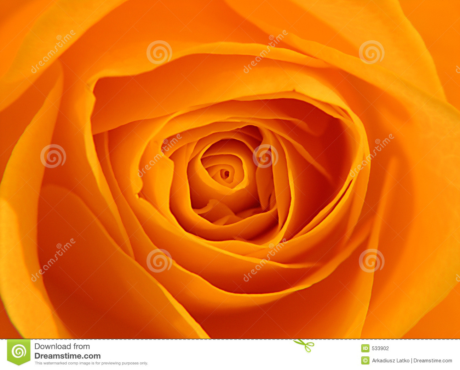 Download 桔子上升了 库存照片. 图片 包括有 背包, 关闭, 完美, 母亲, beautifuler, beauvoir - 533902