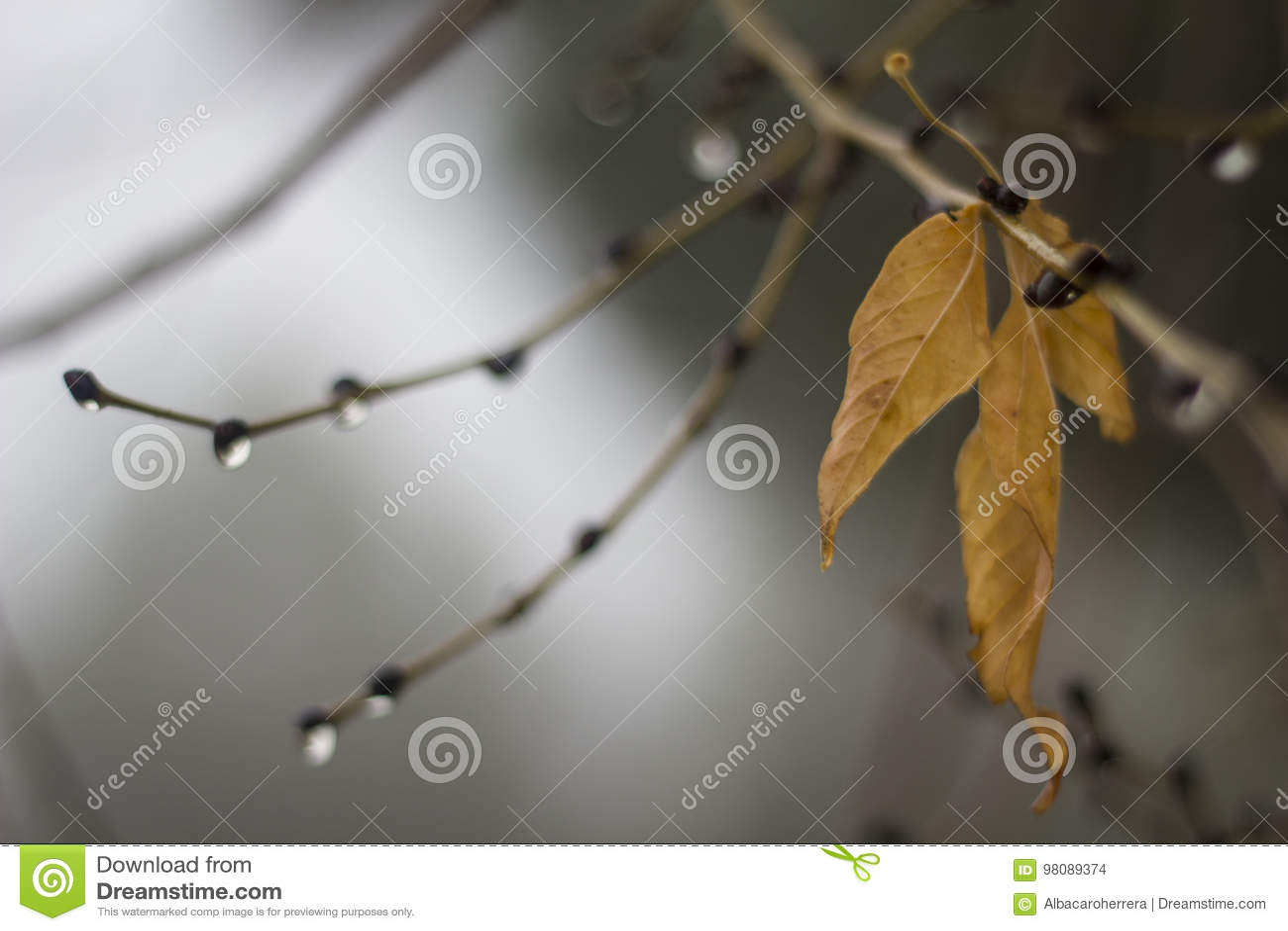 桔子叶子在秋天