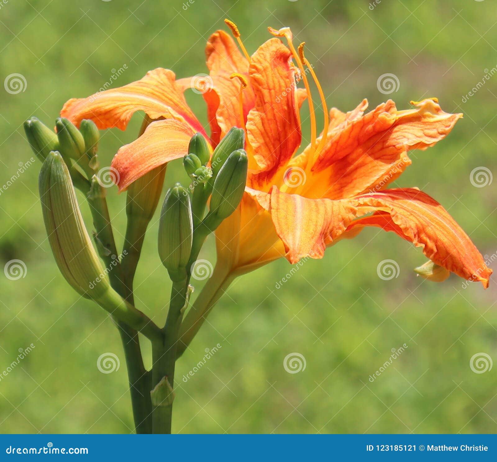 桔子,花,外部,模糊的背景