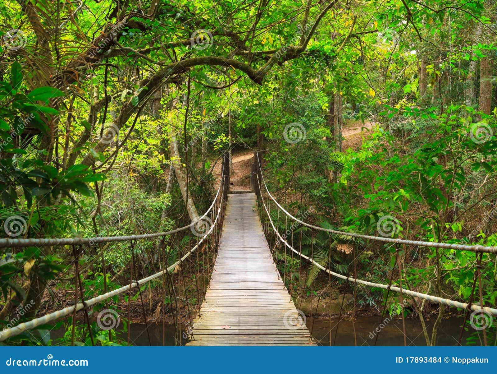 桥梁深密林