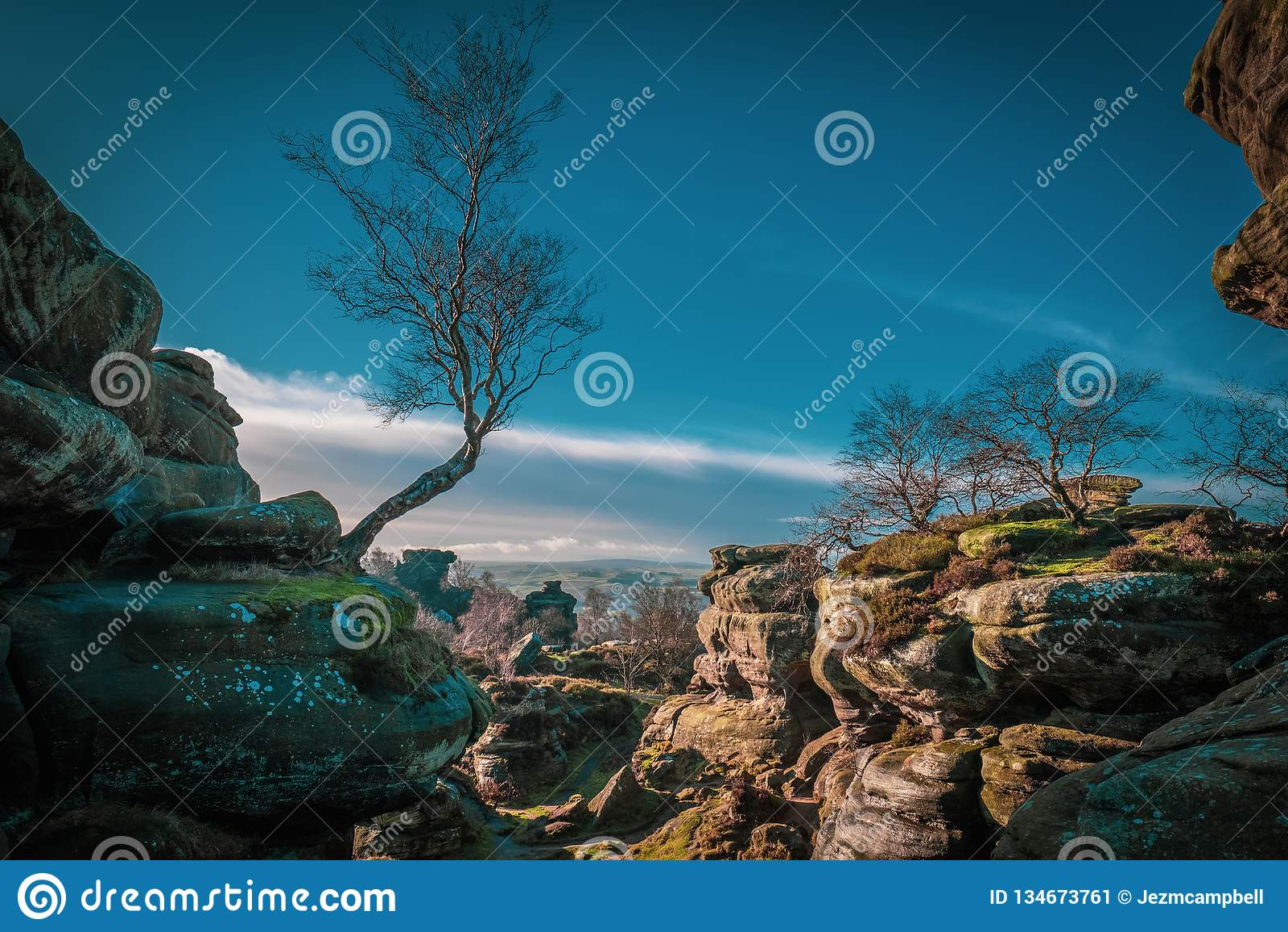 桦树和自然岩层