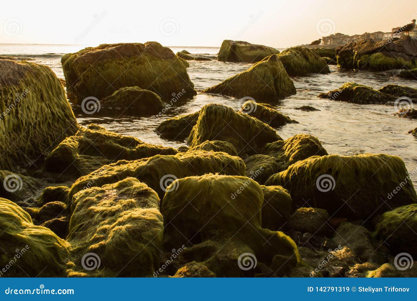 梦想的岩石在梦想的海