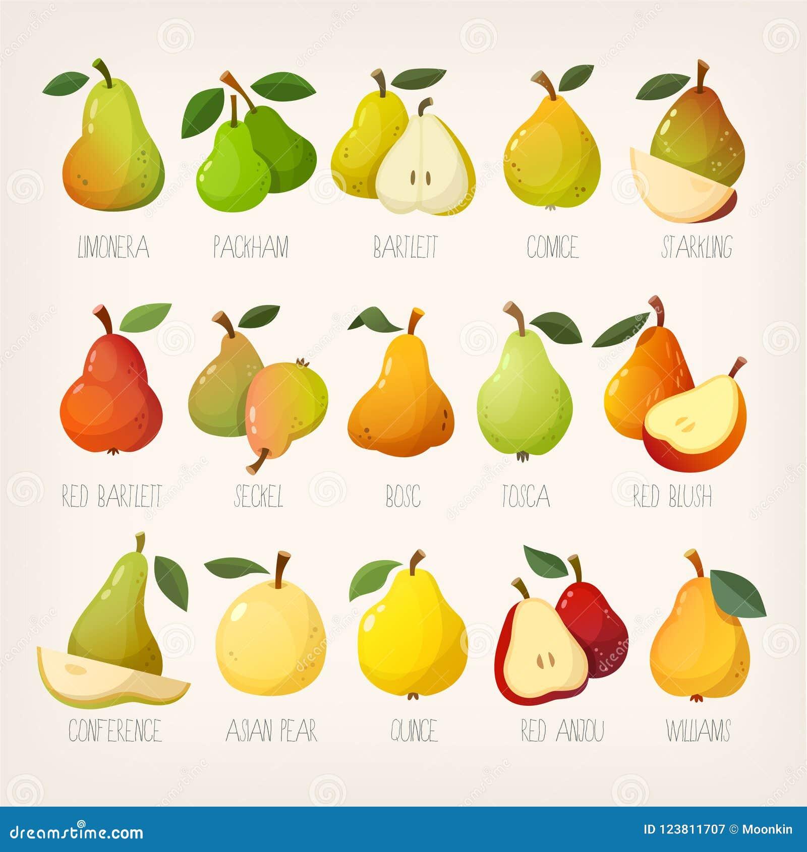 梨大品种与名字的 被隔绝的传染媒介图象