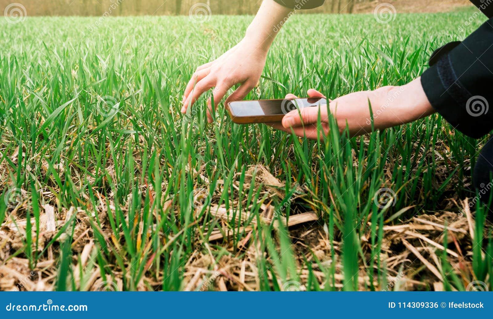 检查收获的年轻农业妇女生物学家