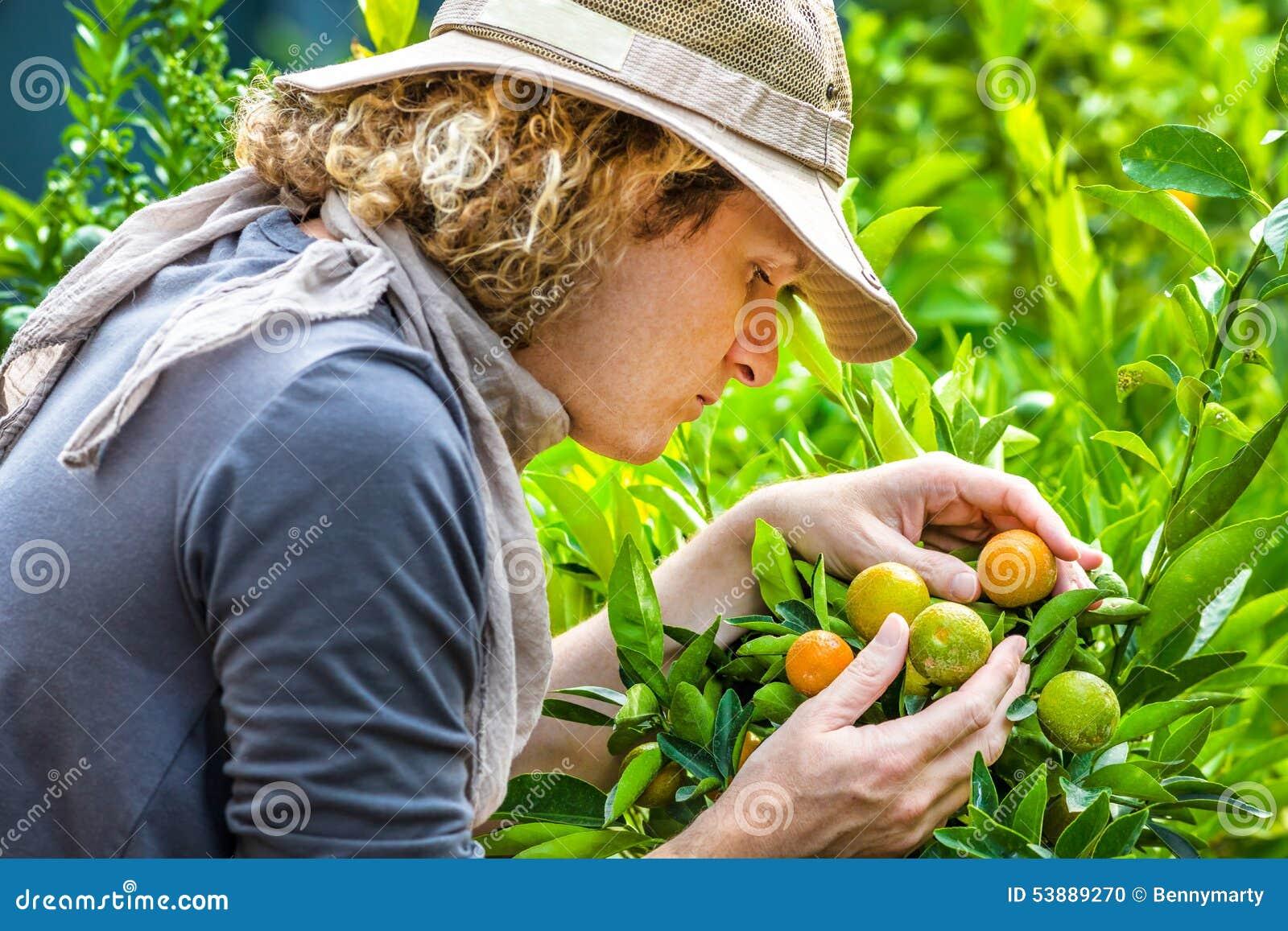检查蜜桔的农夫