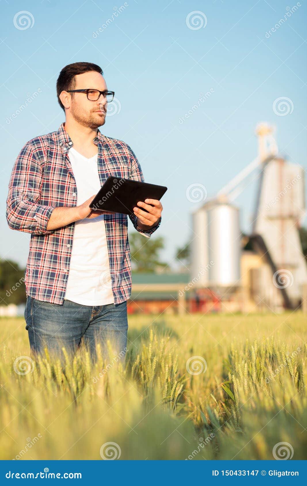检查领域的严肃的年轻农夫或农艺师麦子植物,运作在片剂